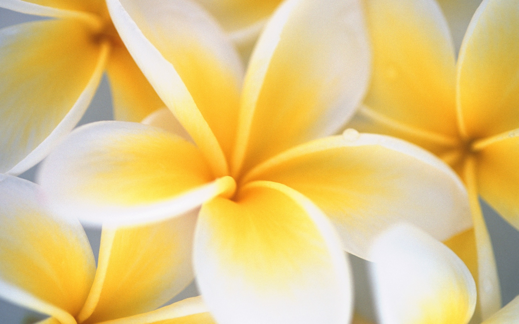 Cool Flower Backgrounds