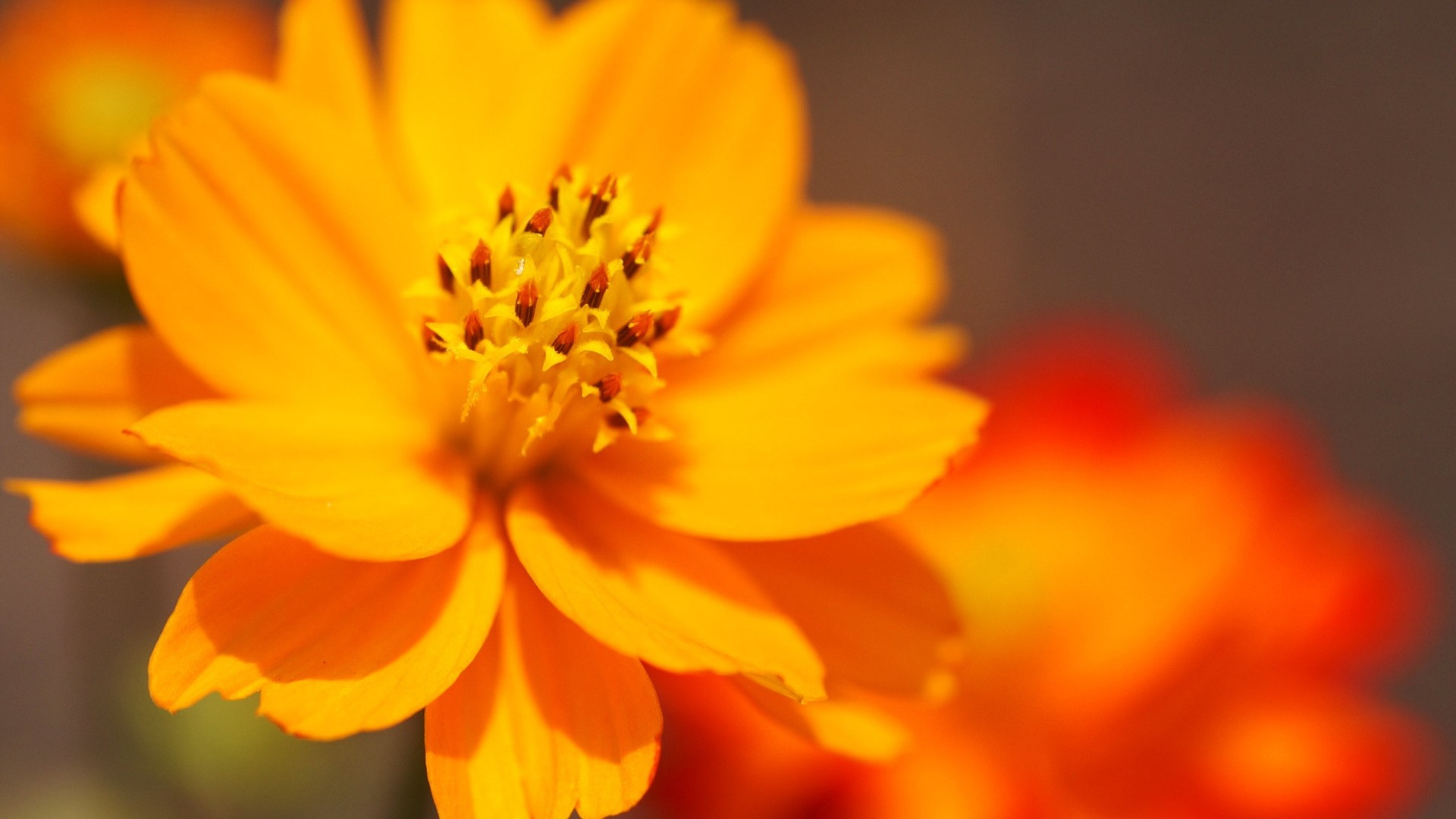 Cool Flower Pictures