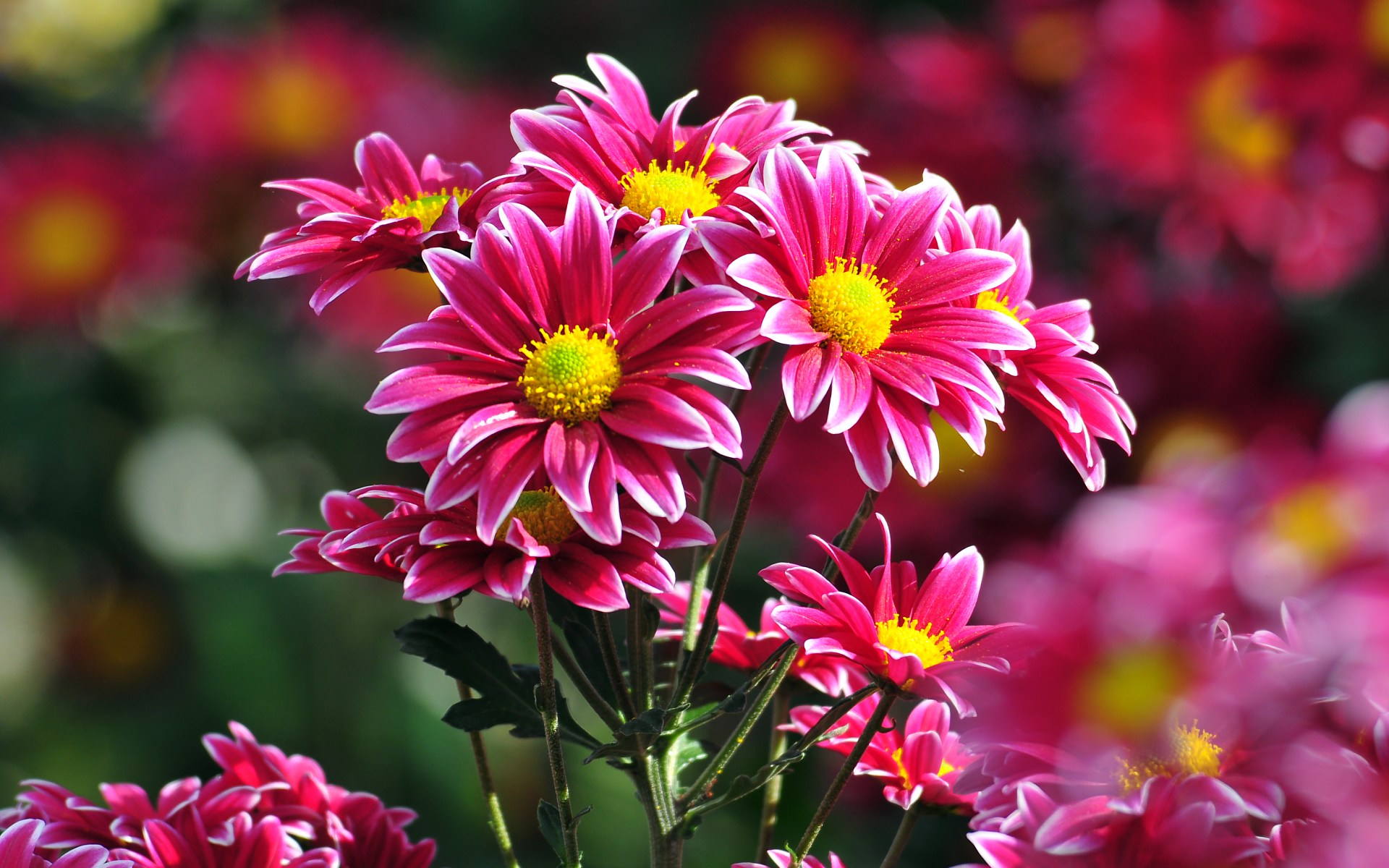 Cool Flowers HD