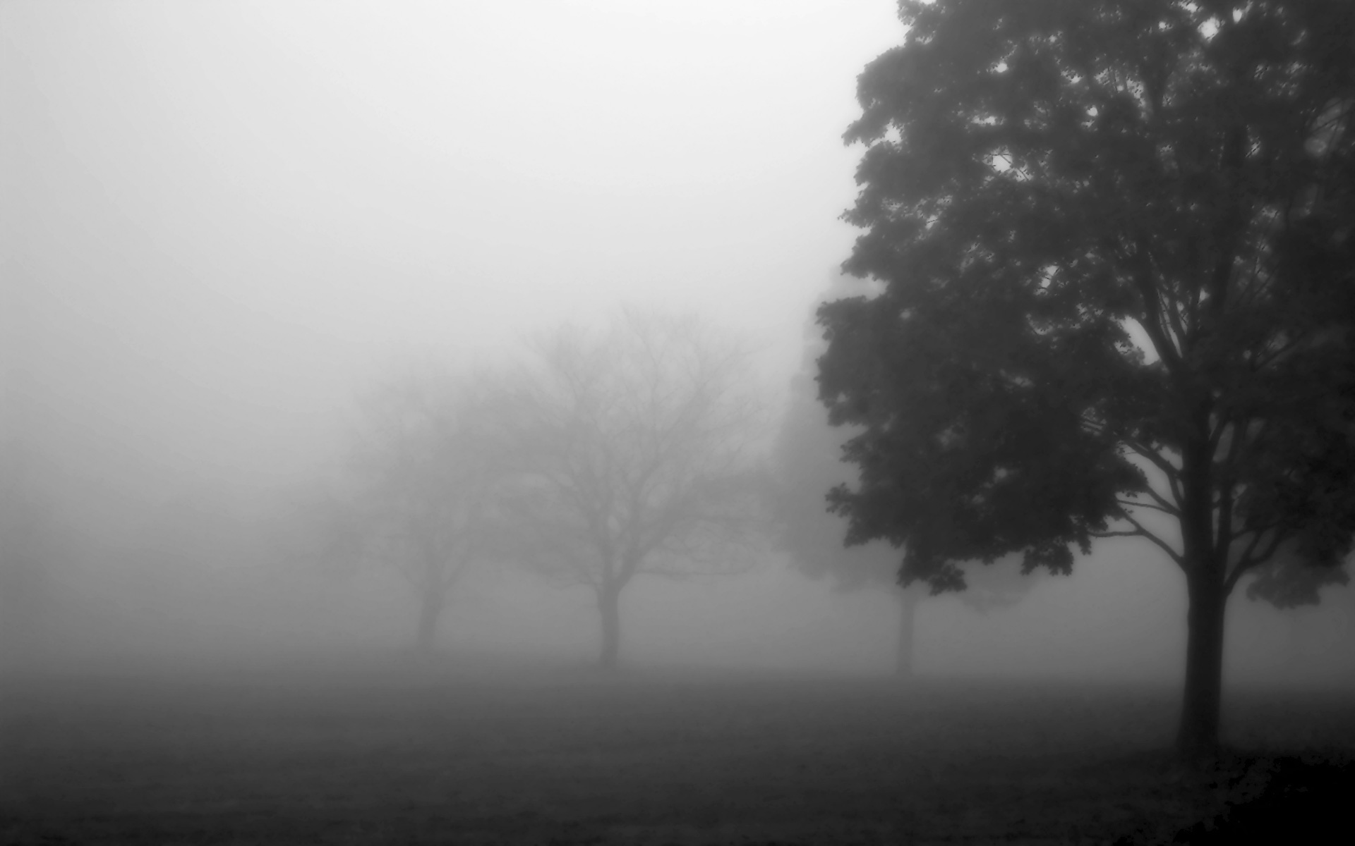 fod hd wallpapers forest black and white in fog cool widescreen wallpapers