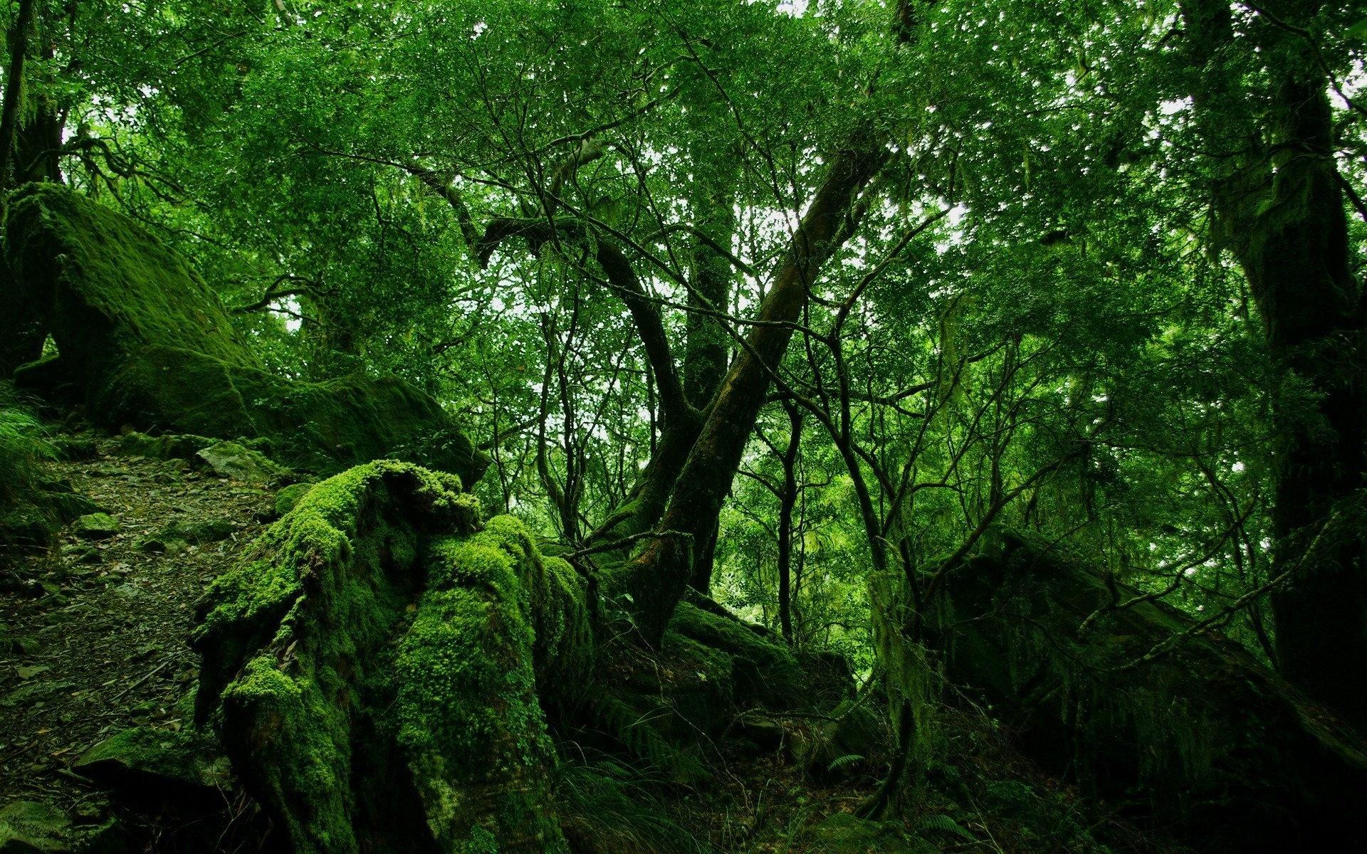 Cool Forest Moss Wallpaper