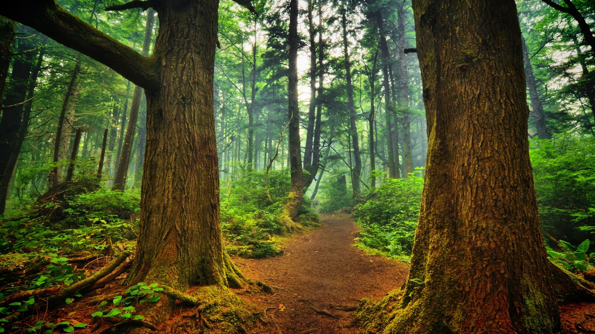 Cool Forest Path Wallpaper