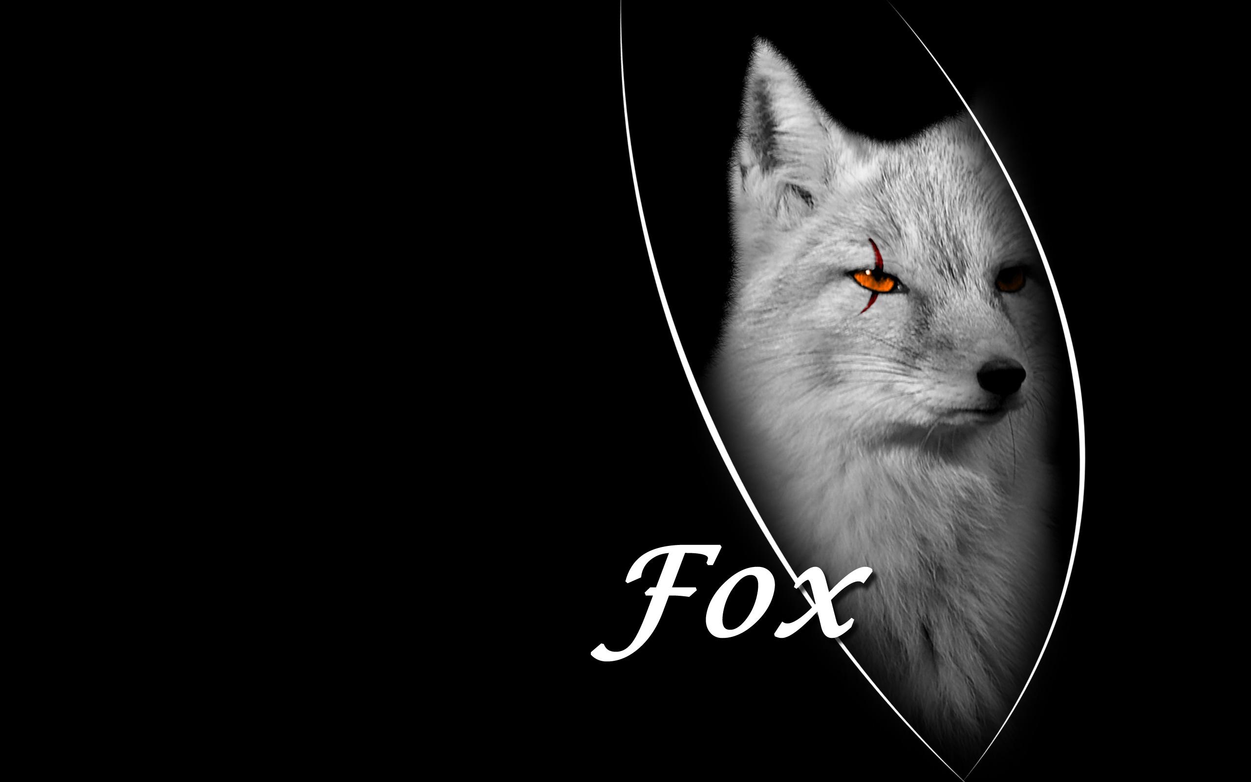 Cool Fox Wallpaper 2560x1600 12308