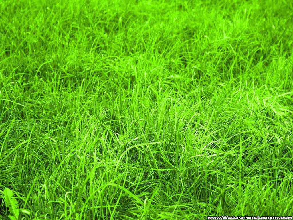 Green Grass Wallpapers