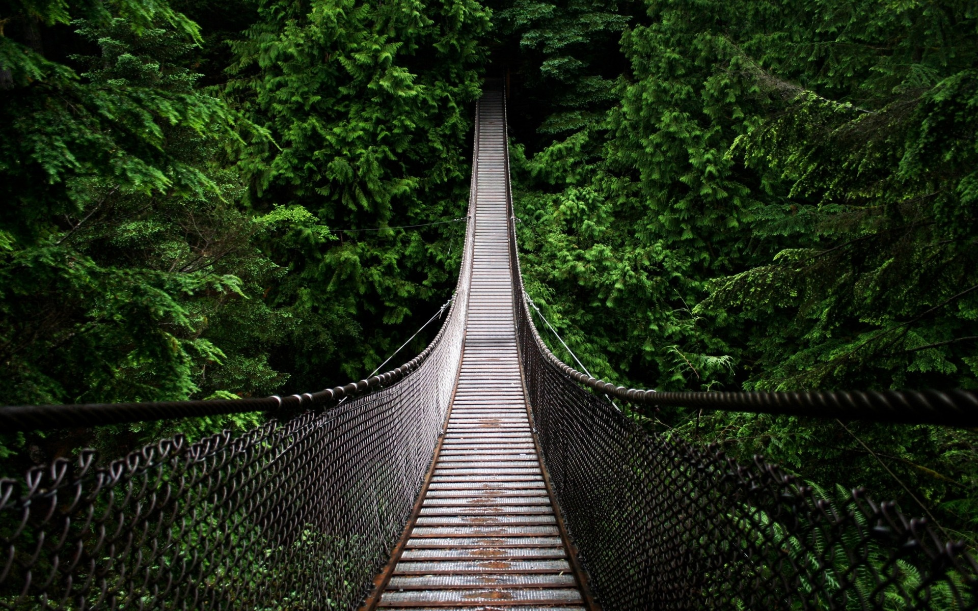 Cool Hanging Bridge Wallpaper in 1920x1200 Widescreen