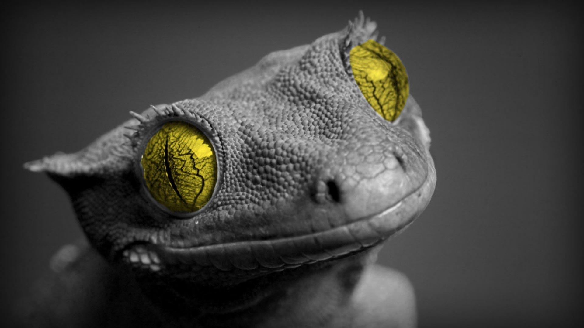 cute lizard widescreen high definition wallpaper