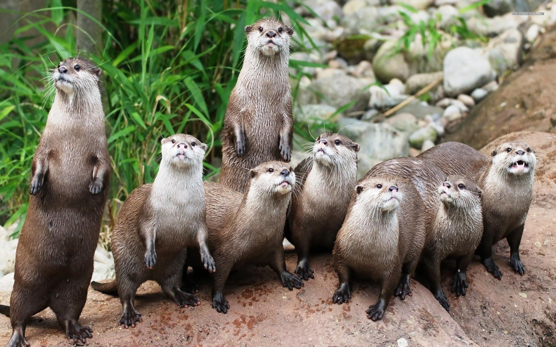 Cool Otter Wallpaper
