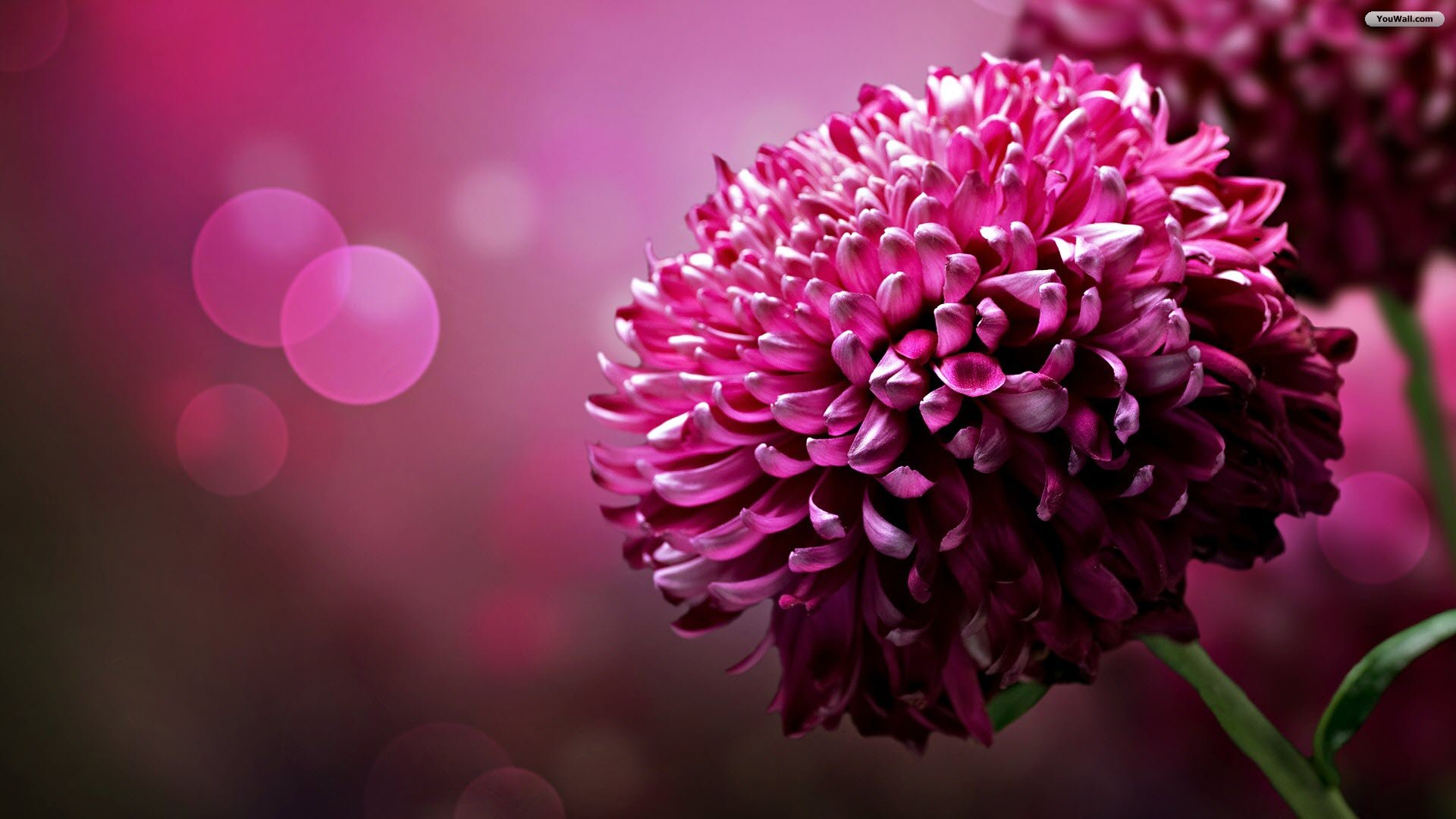 Full Large Purple Flower Wallpapers ...