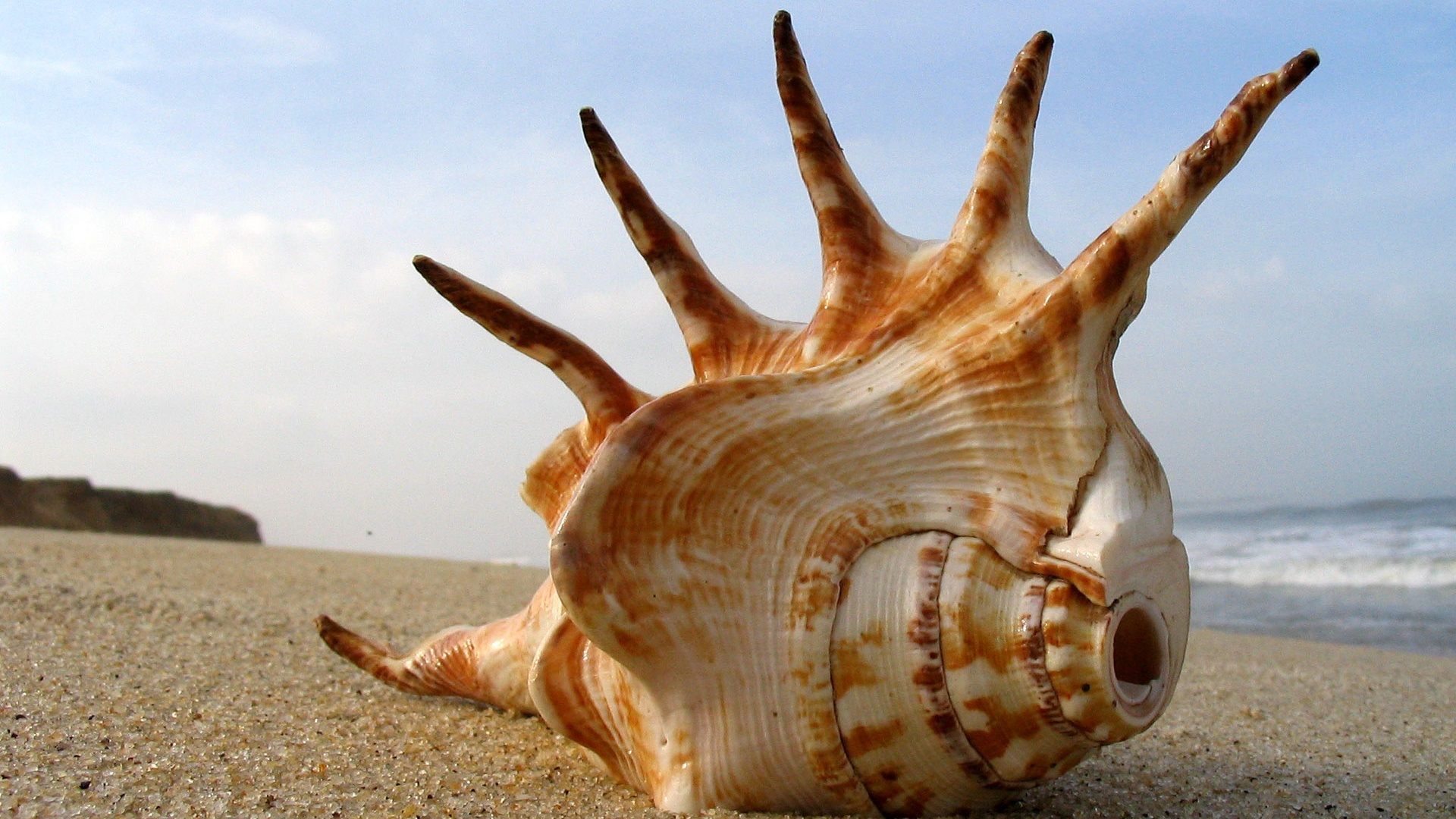 Cool Mohawk Sea Shell HD wallpapers