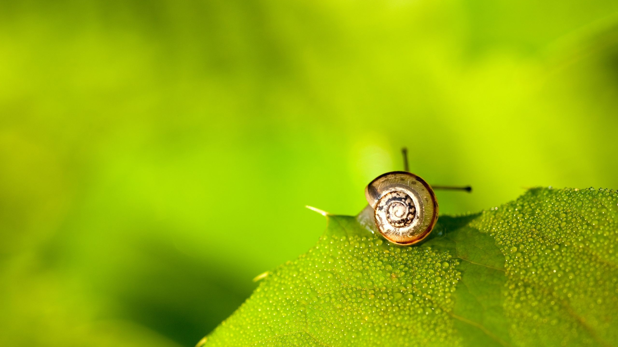 Cool Snail Wallpaper