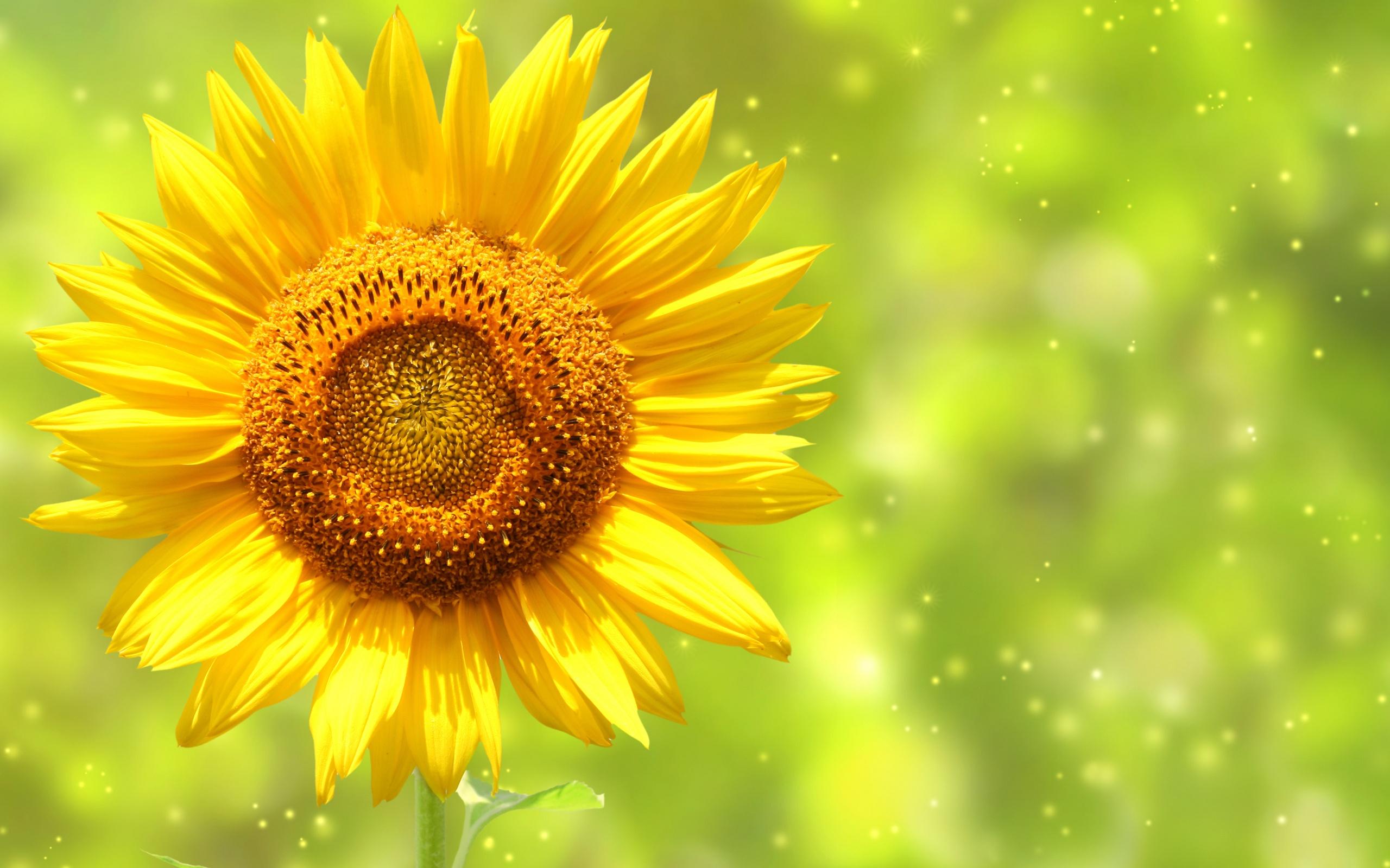 Cool Sunflower Wallpaper