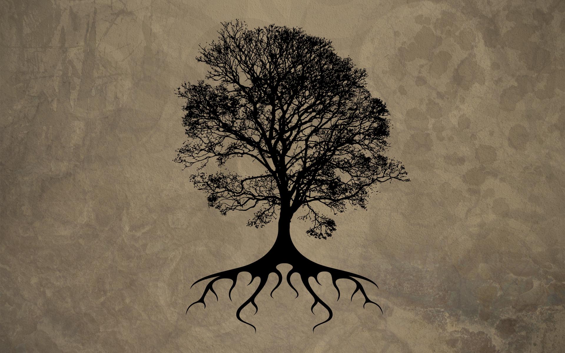 Tree Silhouette Wallpaper 34123 1920x1200 px