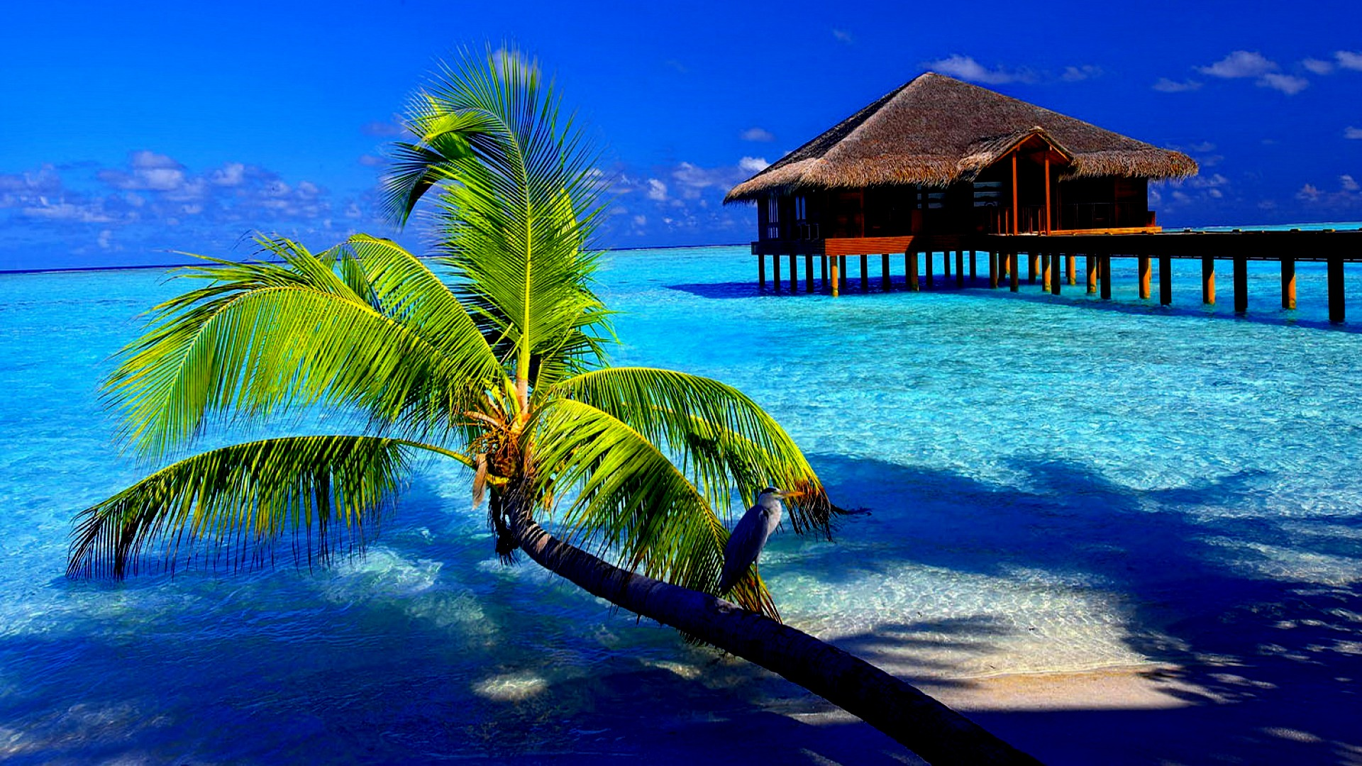 ... cool-water-tropical-wallpapers ...