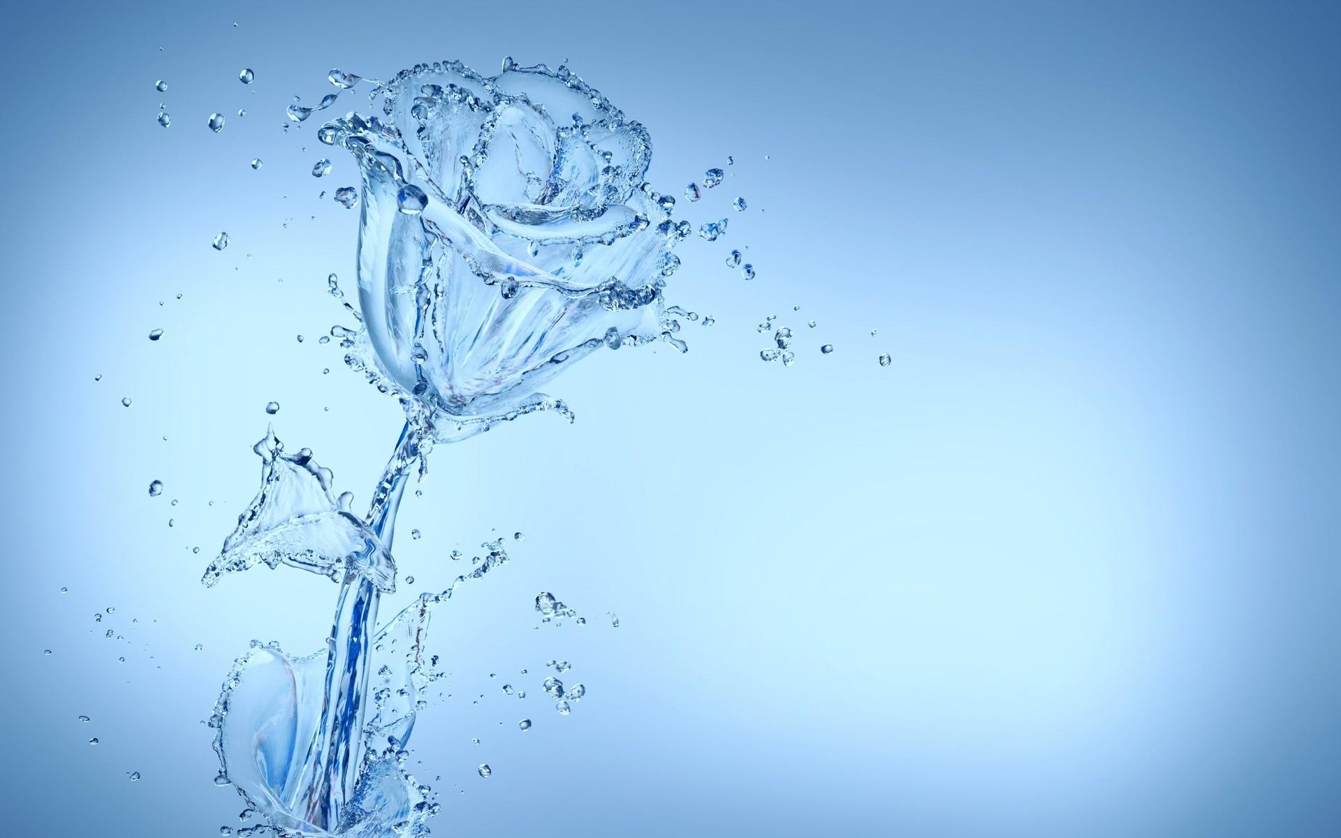 Cool Water Flower Wallpaper