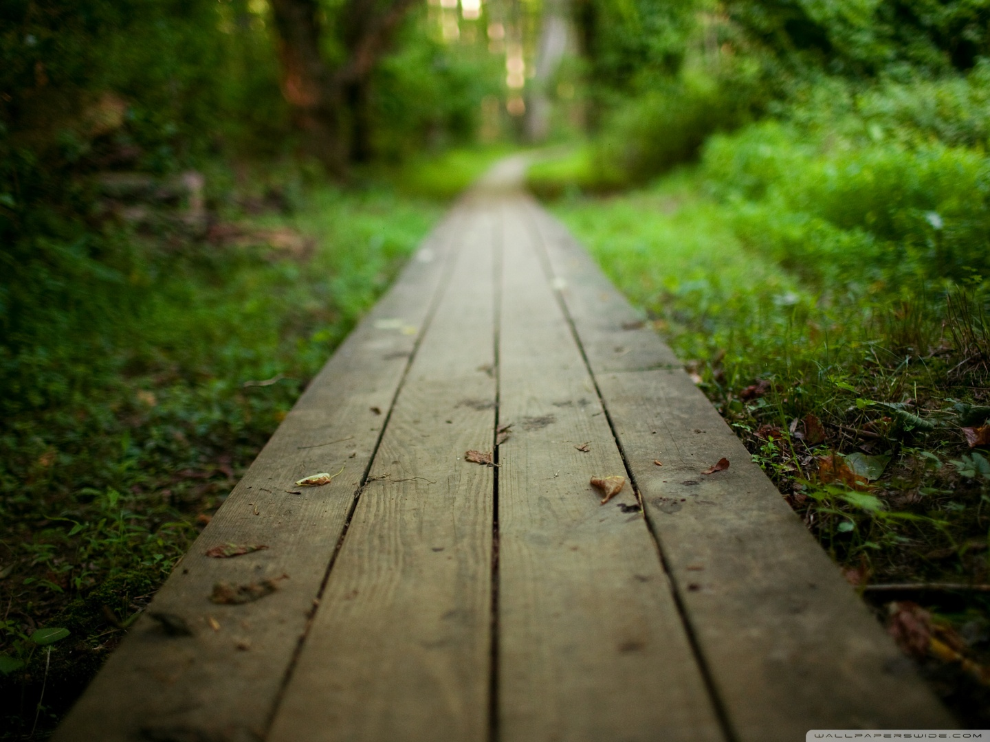 Cool Wooden Path Wallpaper