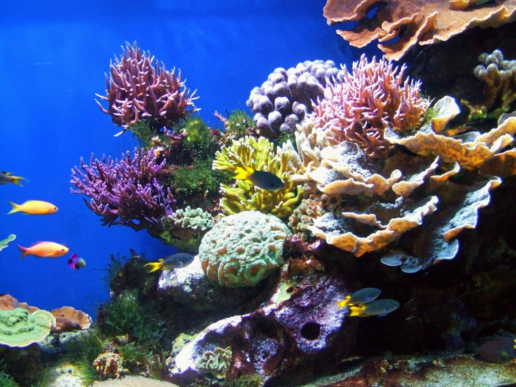 Coral Reef wallpaper | 1024x768 | #55099
