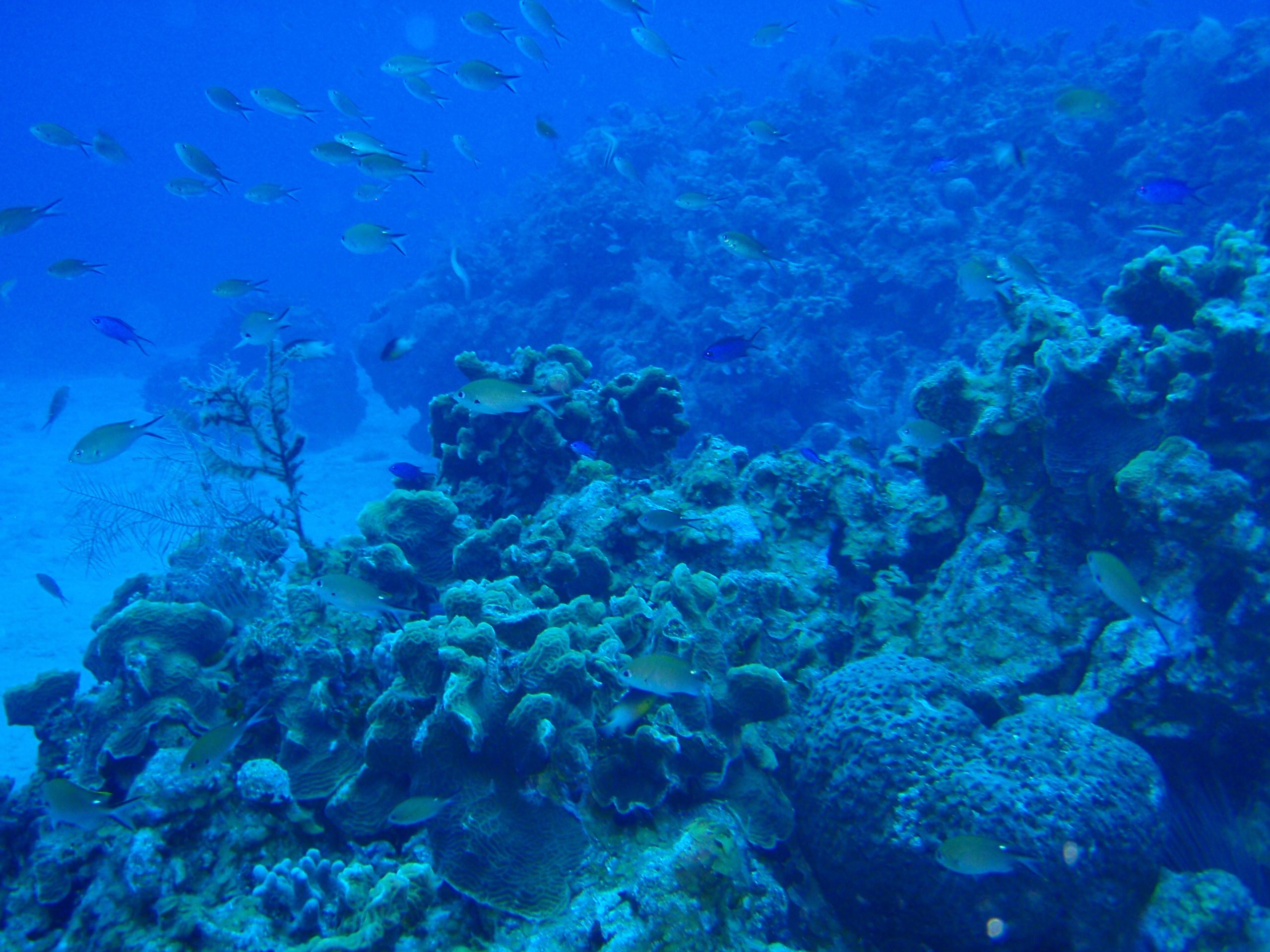 File:Coral Reef, Belize.jpg