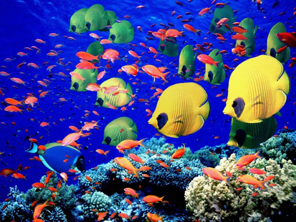 Coral Reef Fish–from wallpaper-kid.com