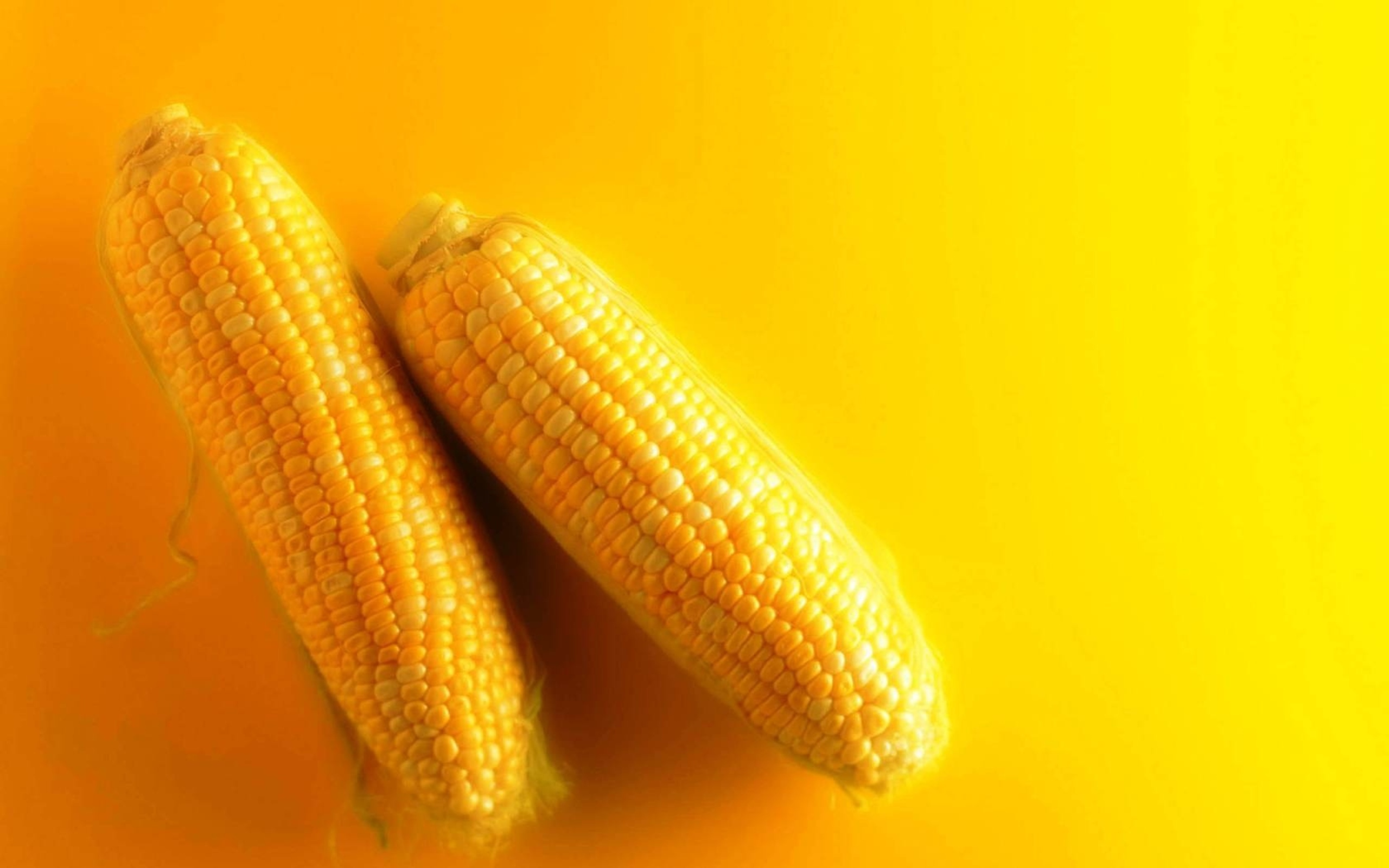 HD Wallpaper | Background ID:337317. 2560x1600 Food Corn
