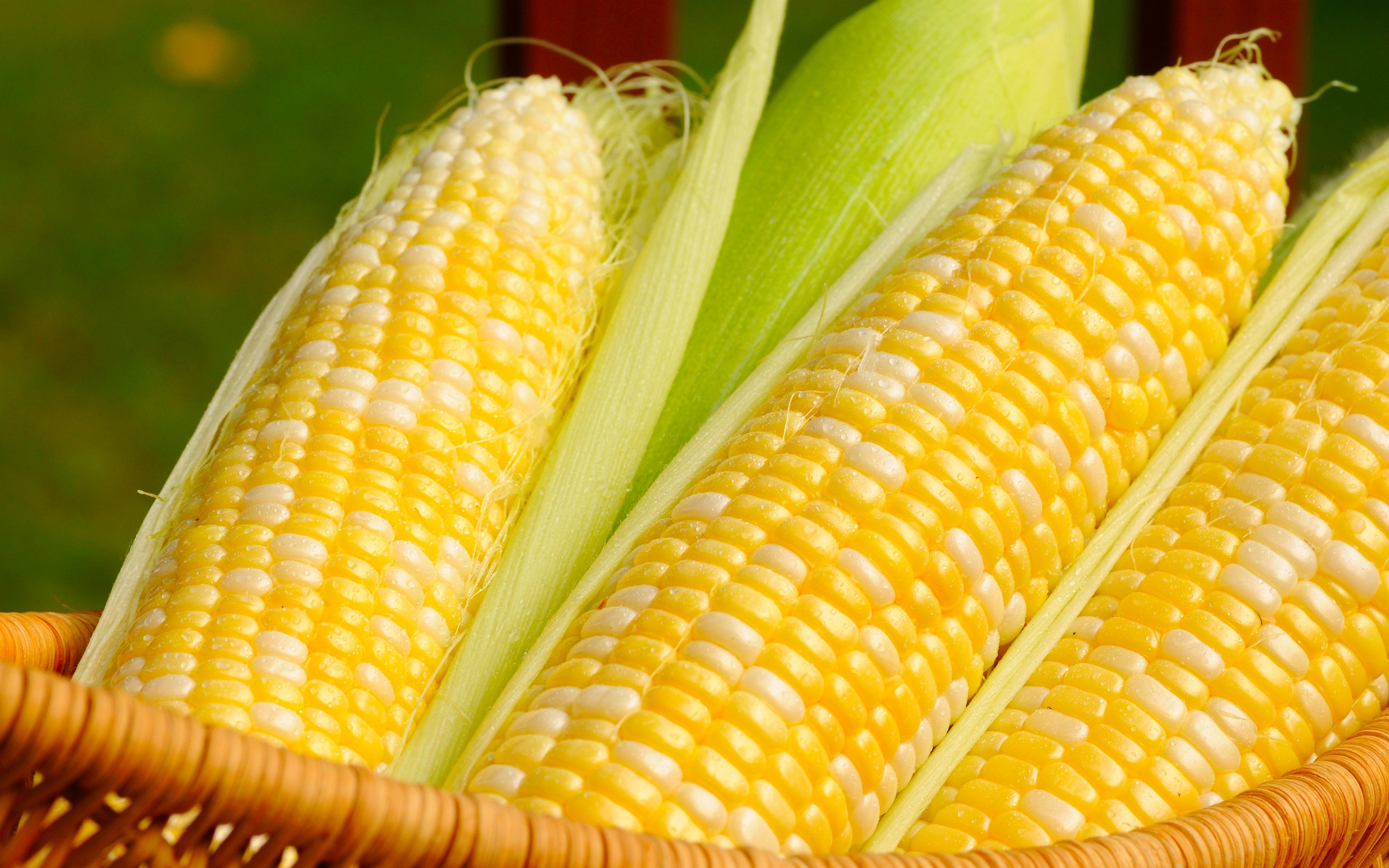 HD Wallpaper | Background ID:368867. 2560x1600 Food Corn