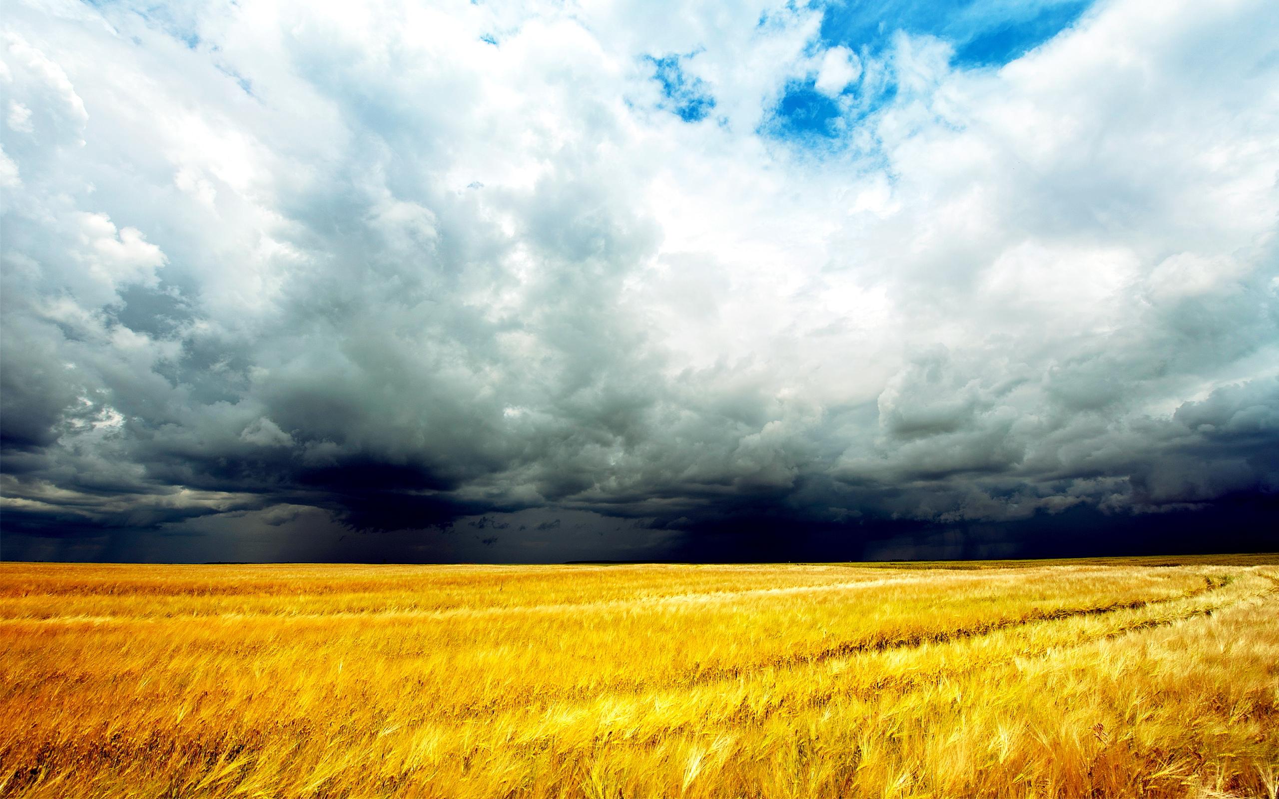 Cornfield angry sky
