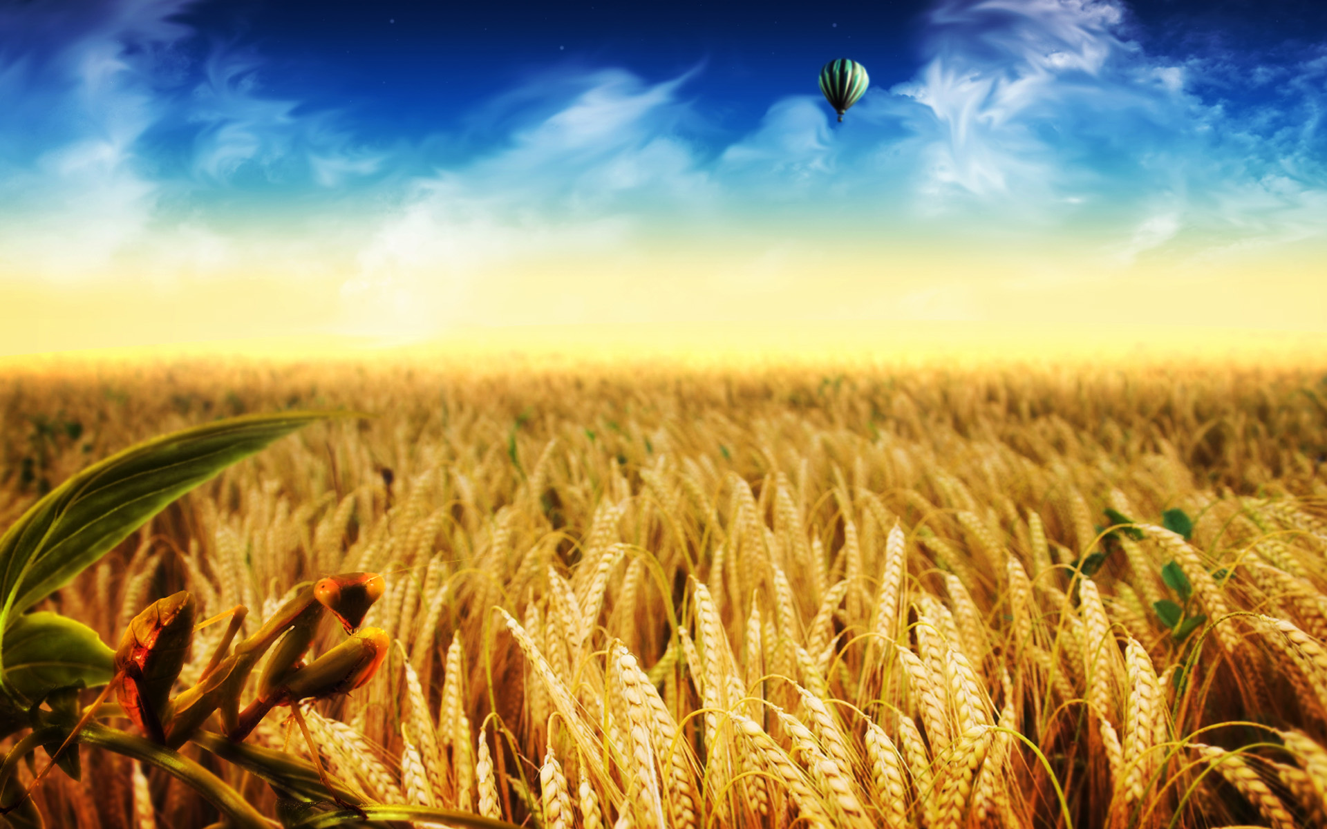 Cornfield Wallpaper