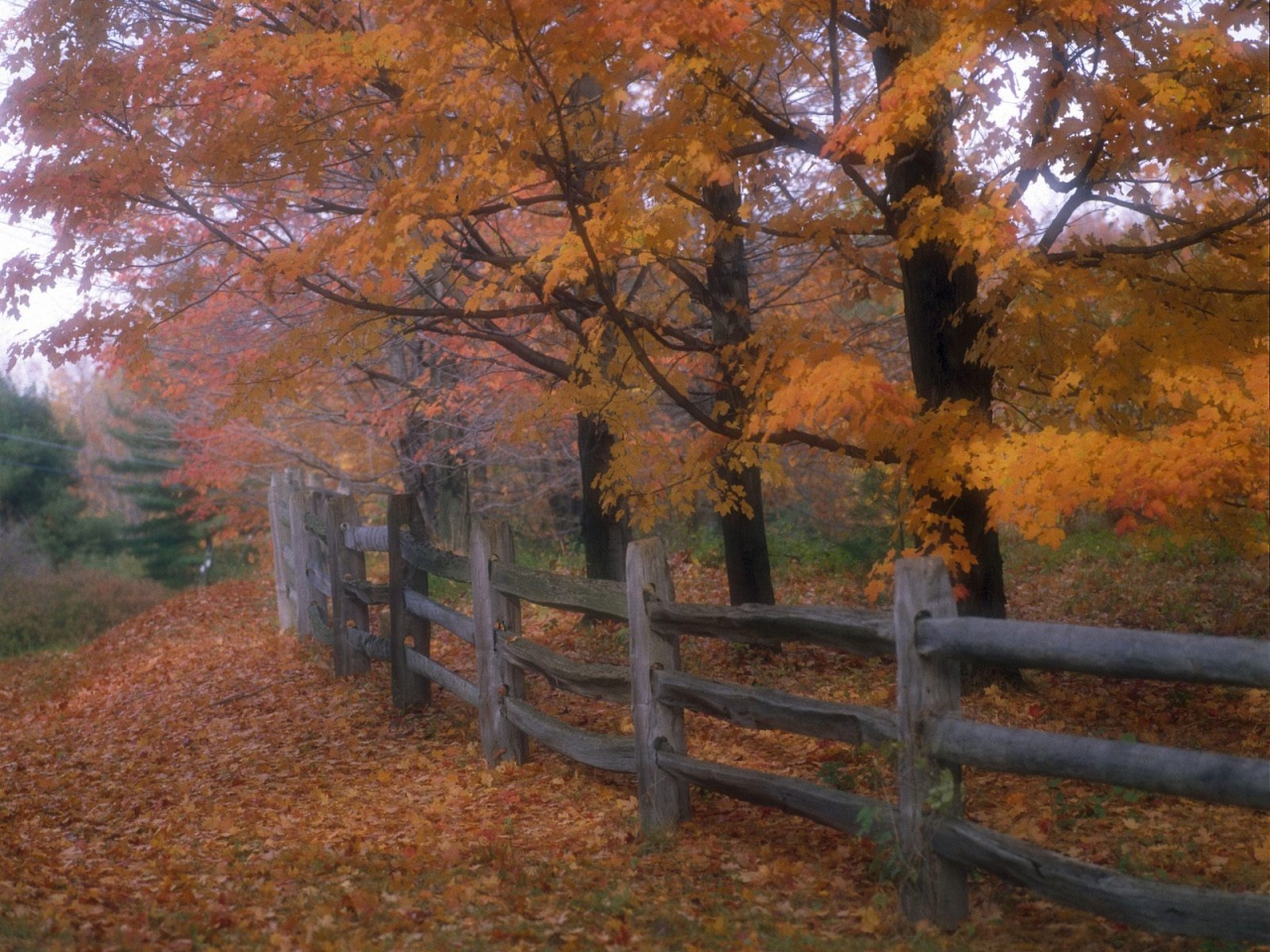 Country Fence Wallpaper 13639