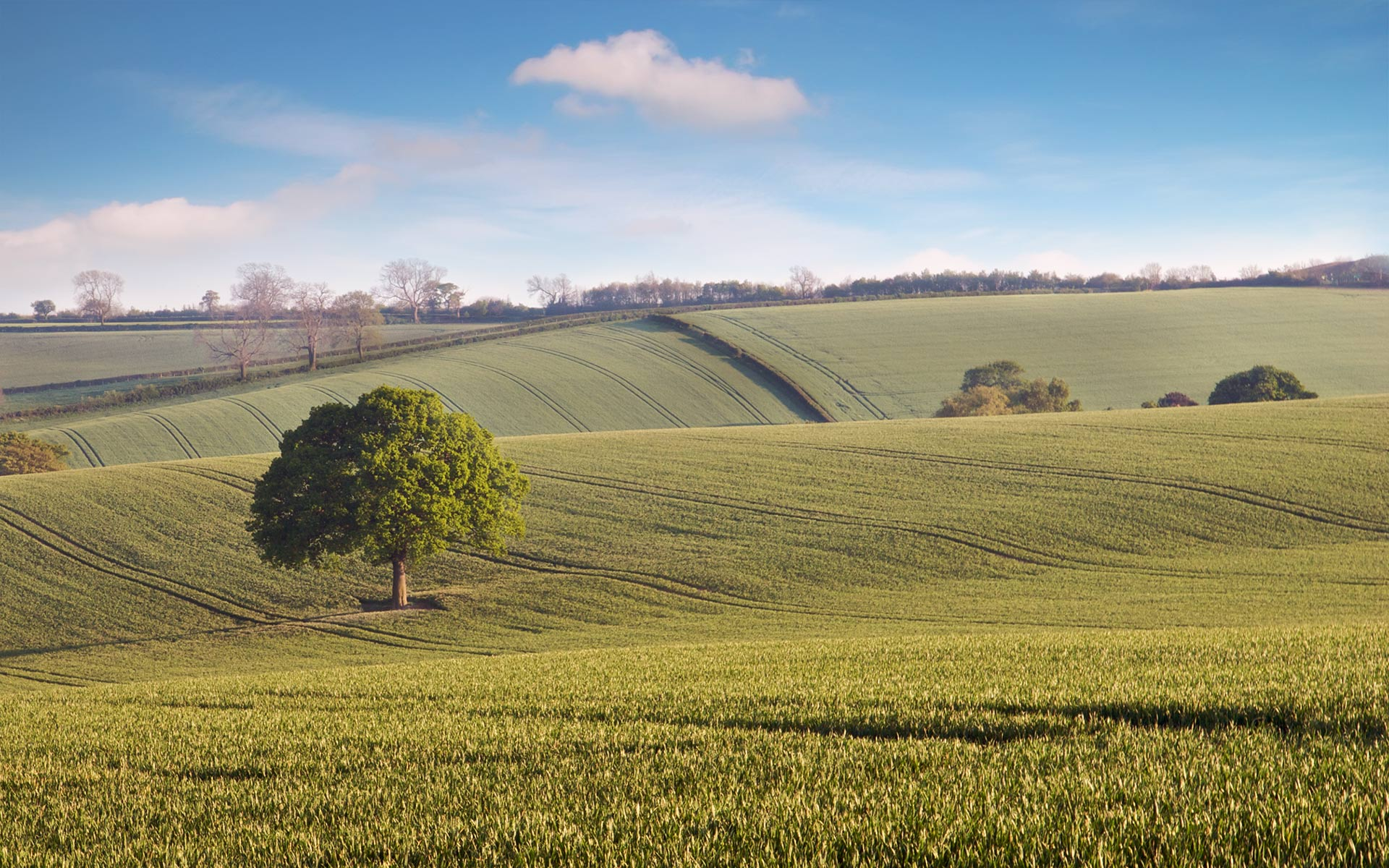 Countryside · Countryside · Countryside · Countryside · Countryside · Countryside Background