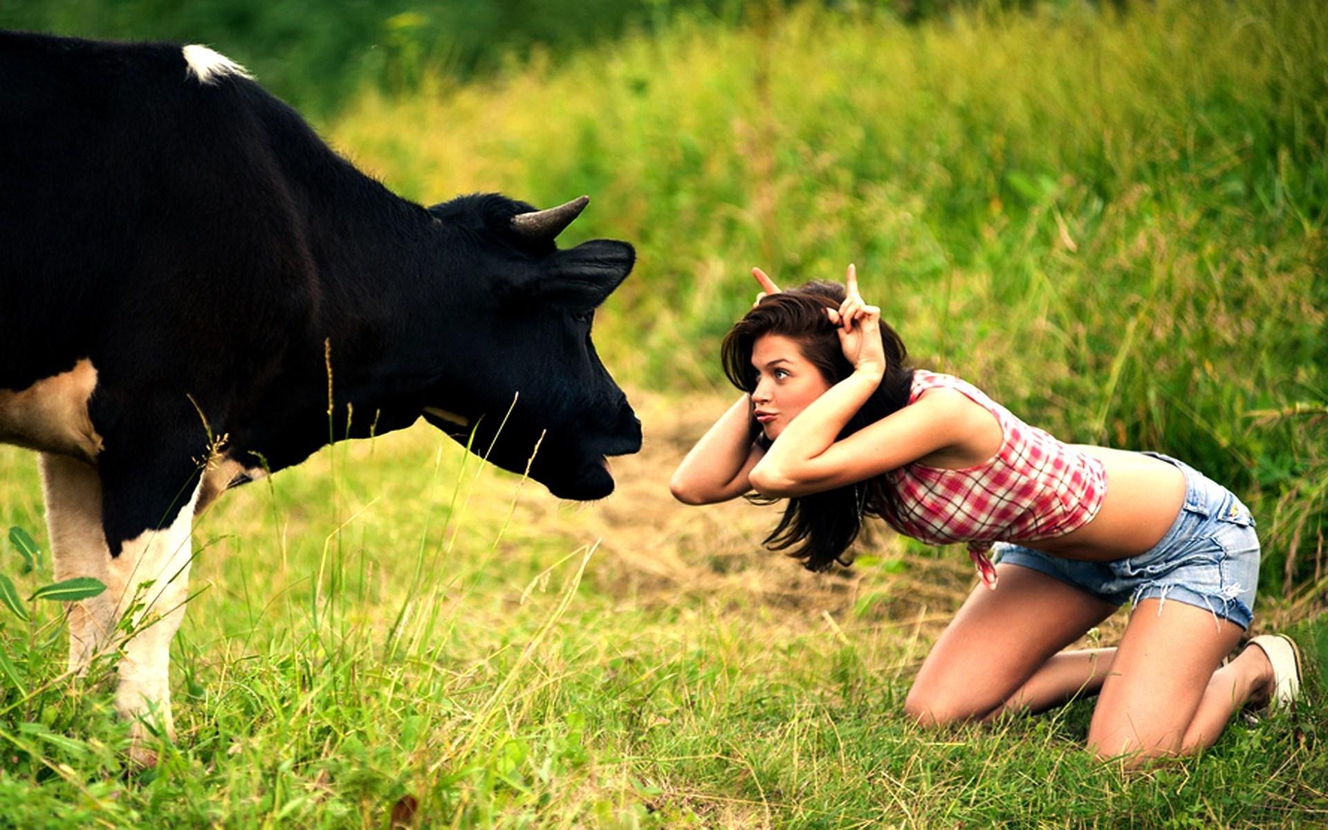 Cow vs Girl Funny Photo