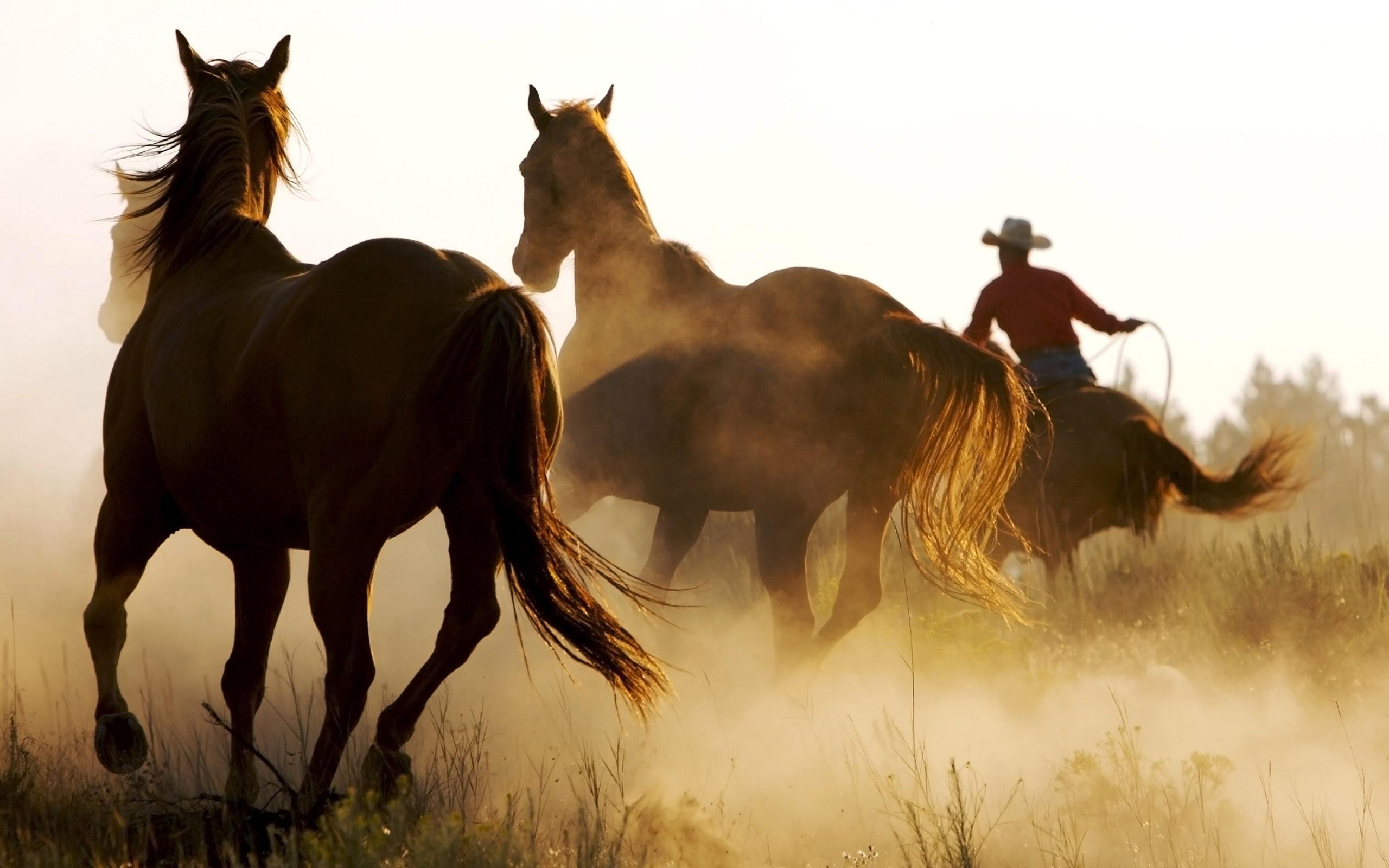 Free Cowboy Wallpaper