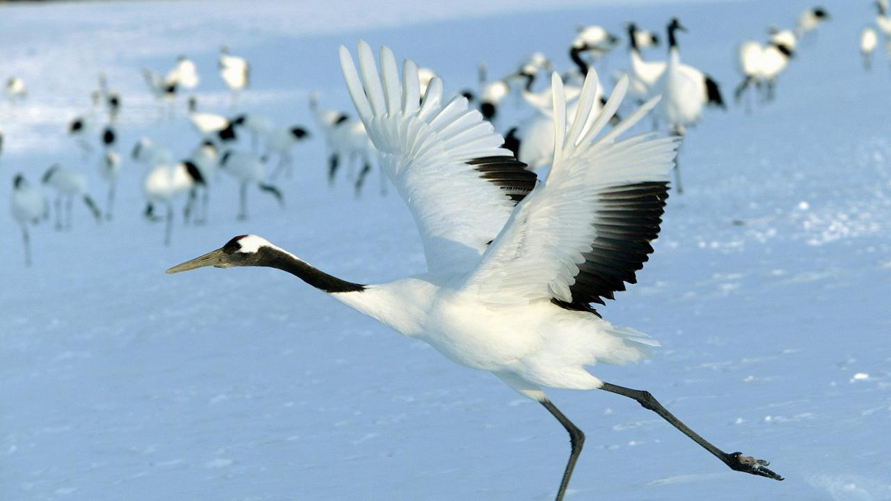 Crane HD wallpaper