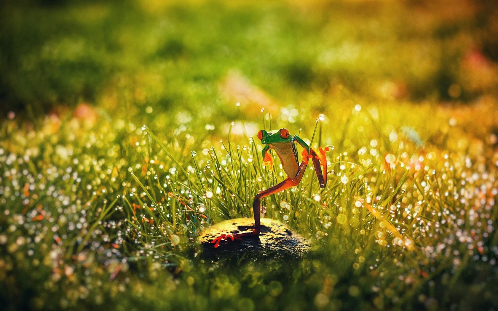 Crazy Frog Rock Grass Morning Dew
