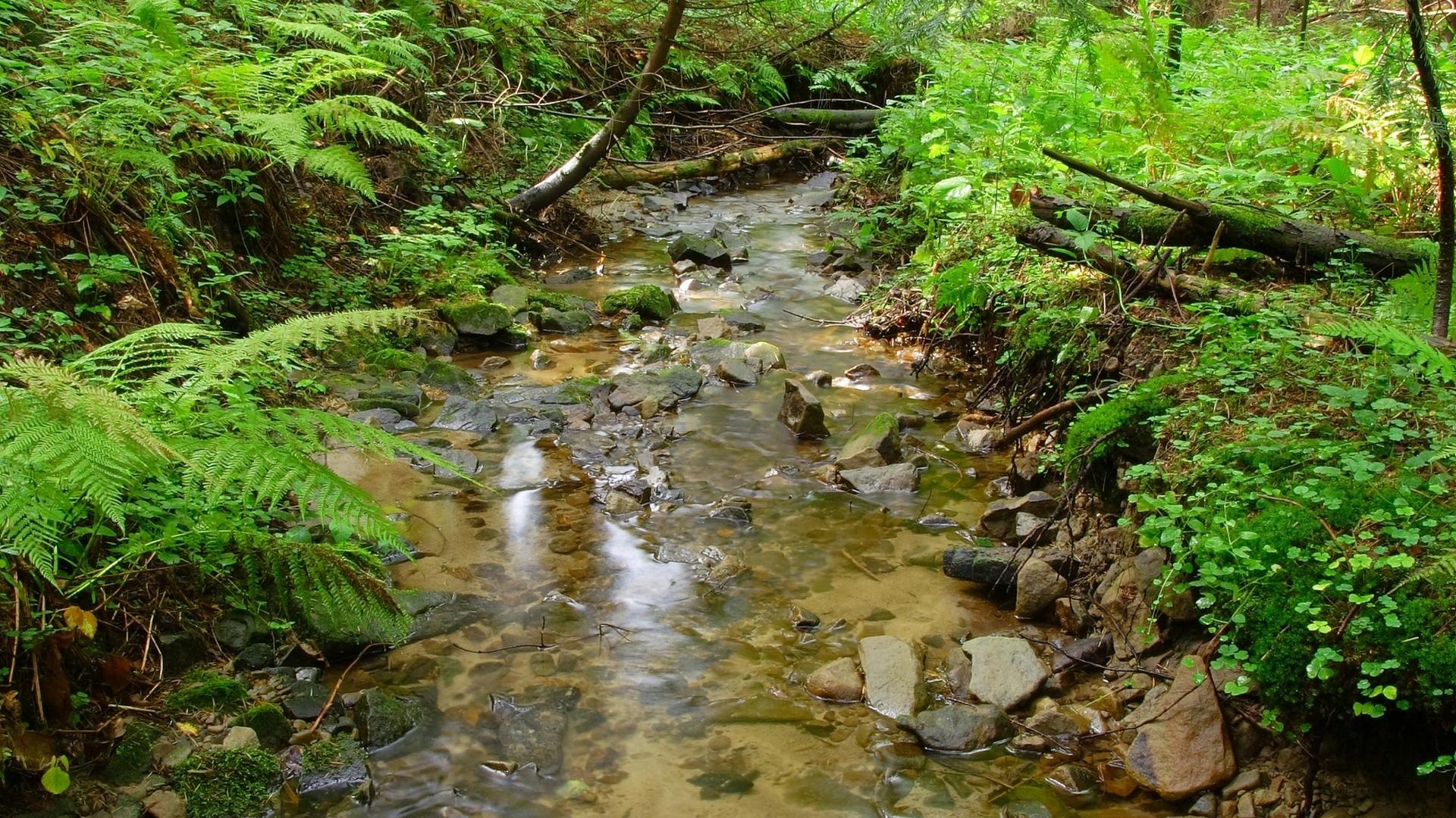 Creek HD
