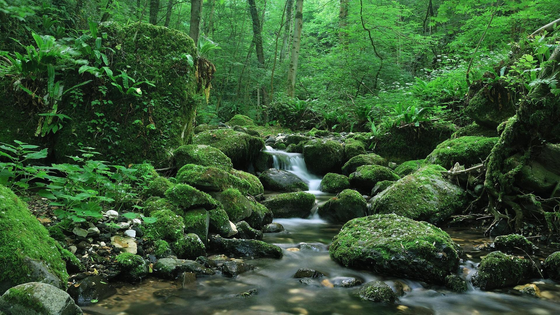 Water forest creek wallpaper