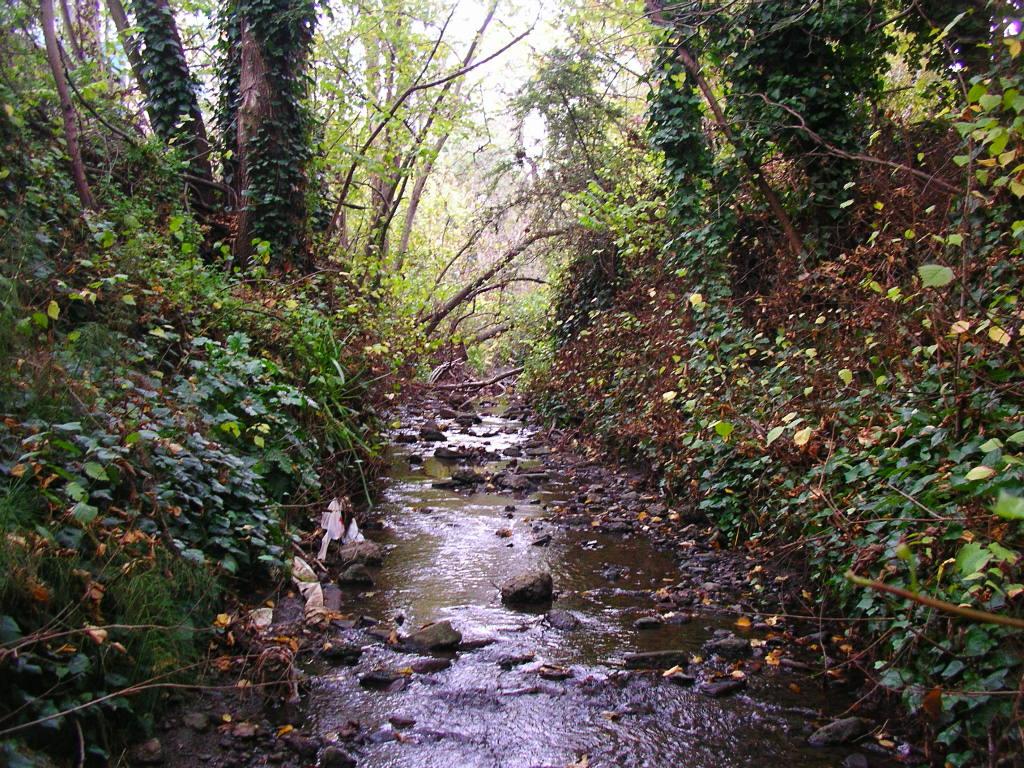 Open Creek