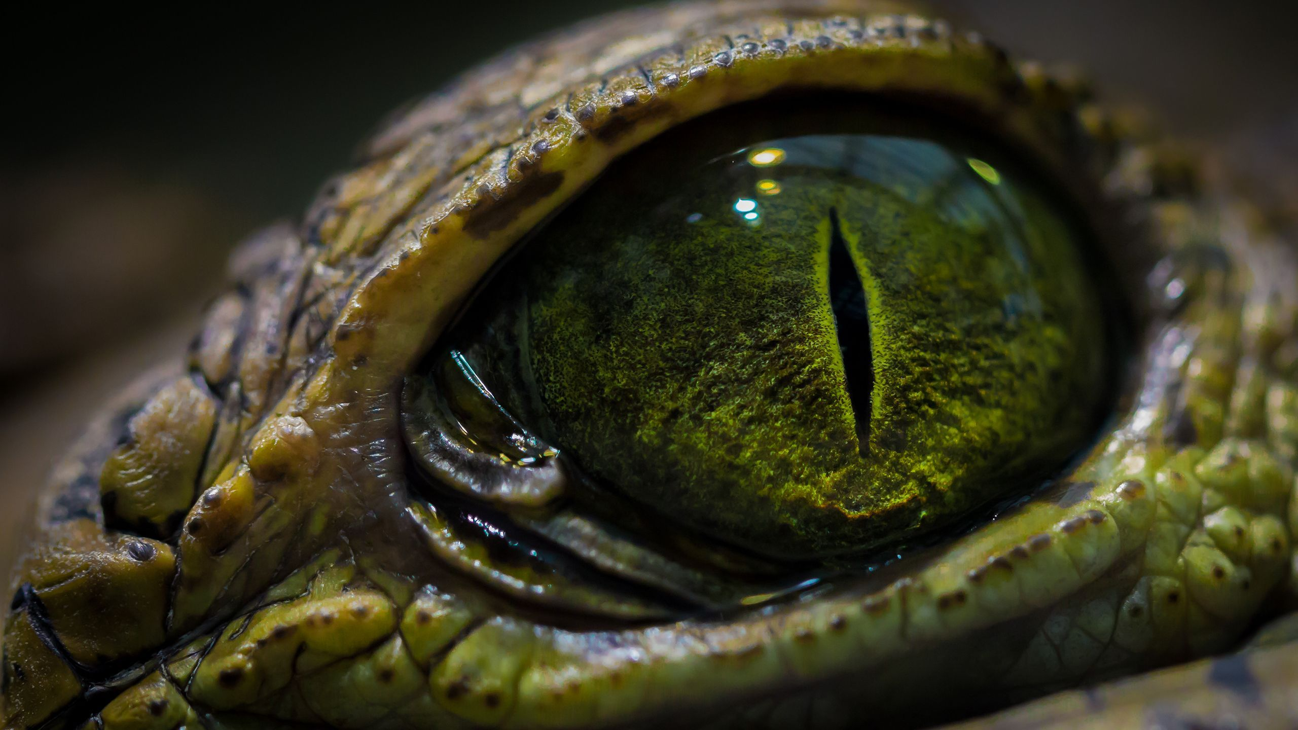 Crocodile eye wallpaper