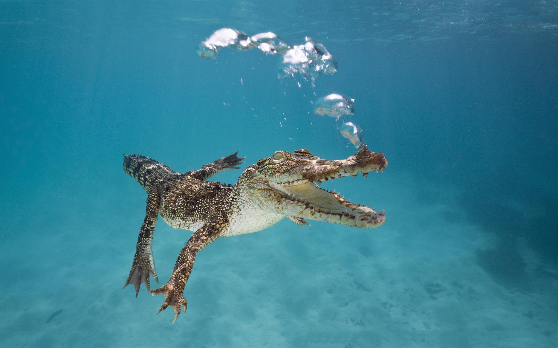Crocodile bubbles