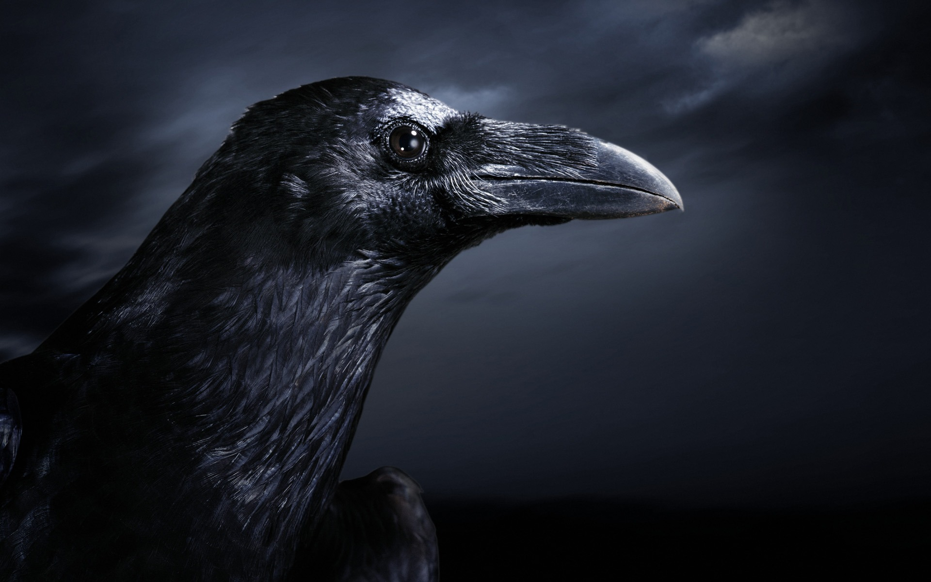 Crow Wallpaper HD