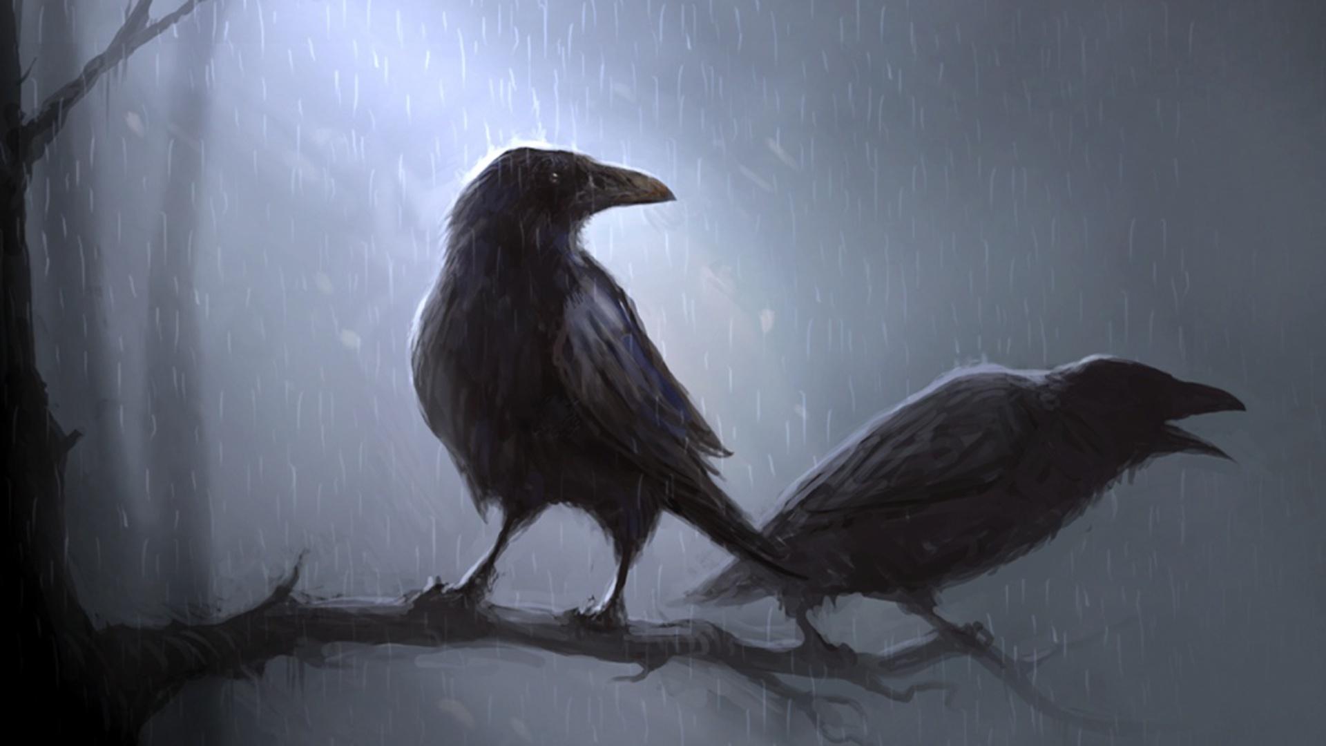 1920x1080 Animal Crow