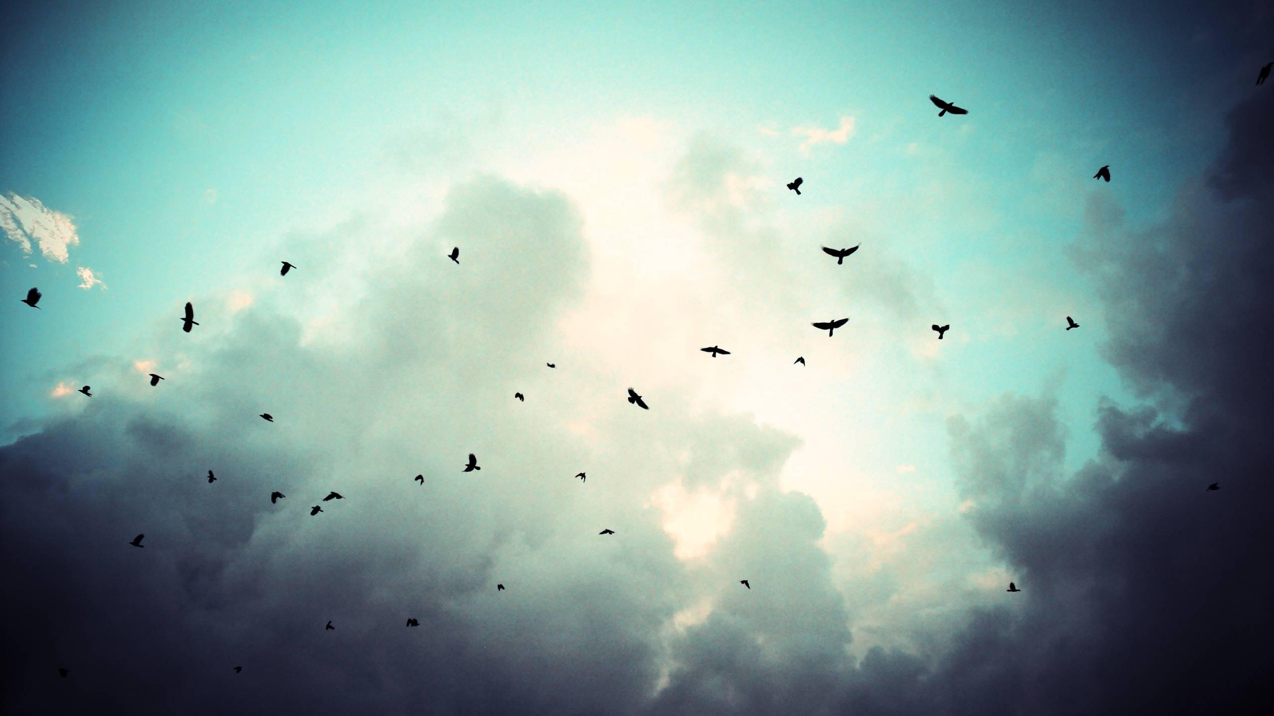 Crow Sky