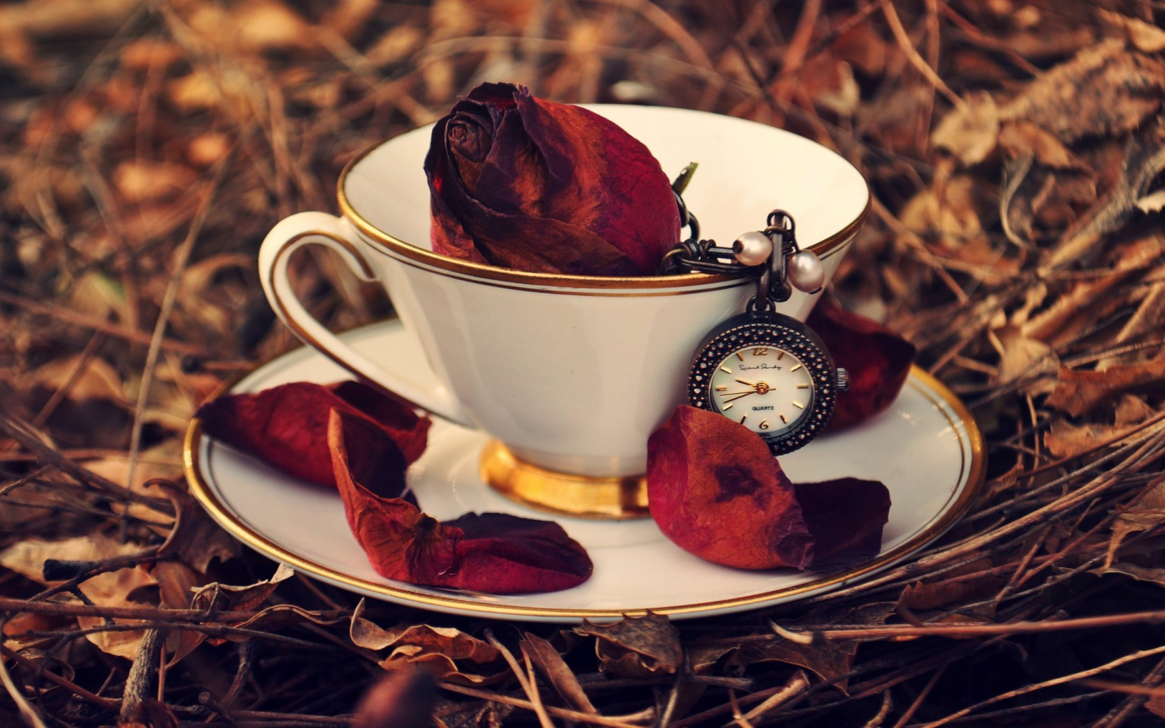 Cup Rose Red Petals Clock Leaves Autumn