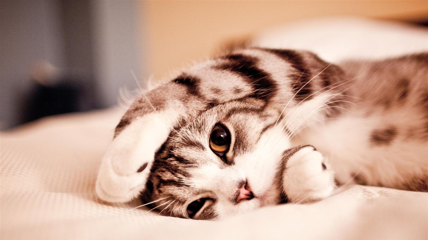 cute animal wallpaper for iphone