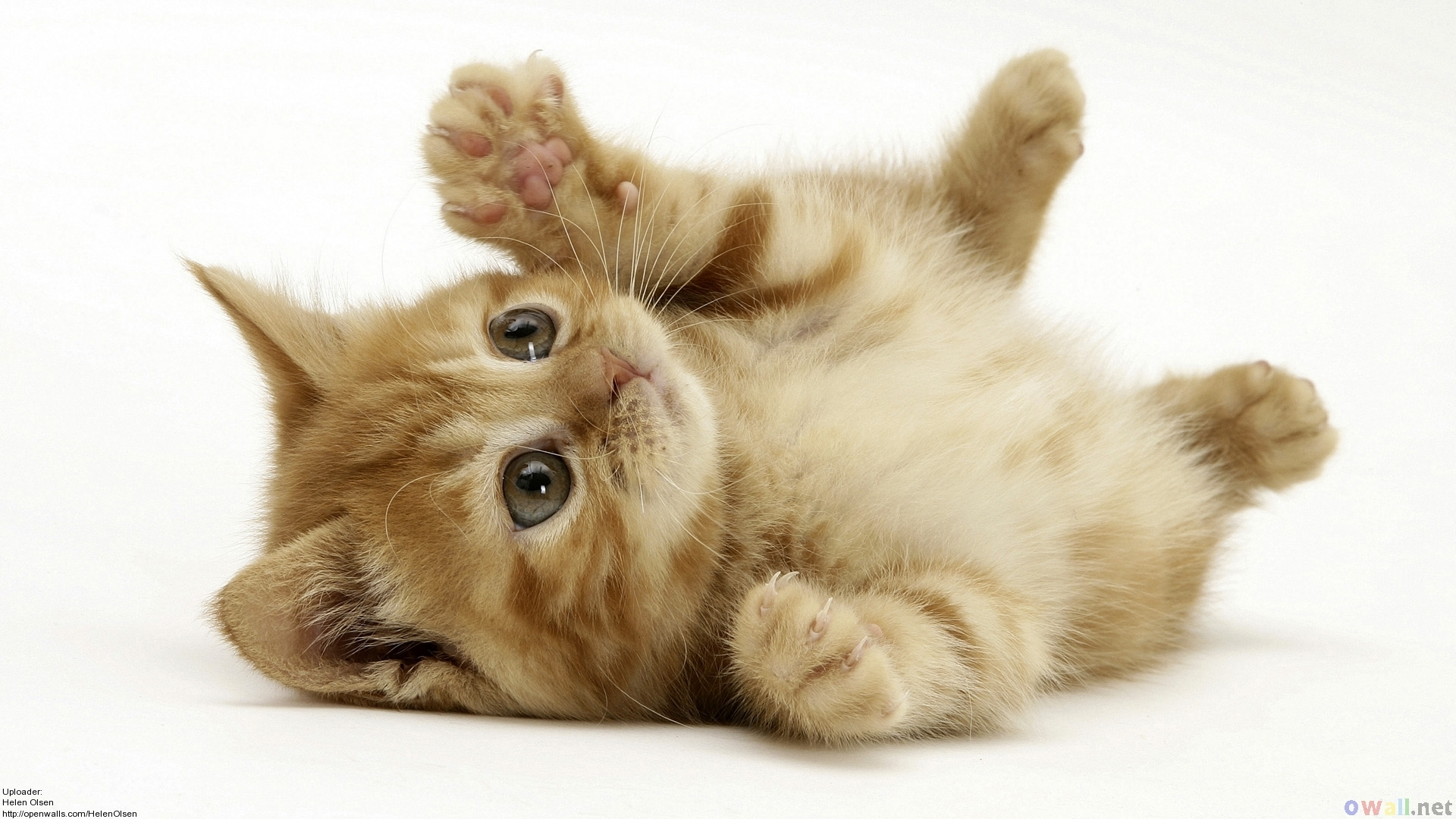 Cute Kittens 5 HD Screensavers