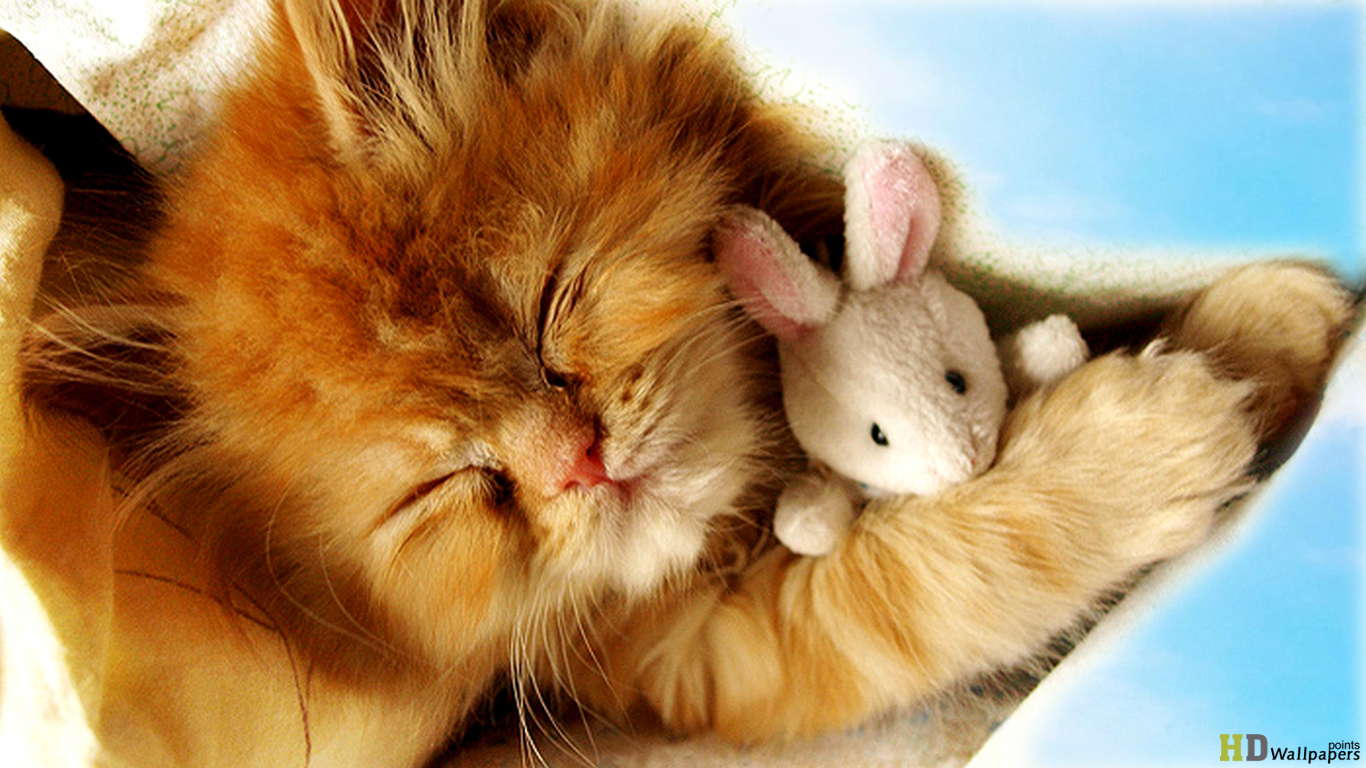 Cute Baby Kittens Wallpaper