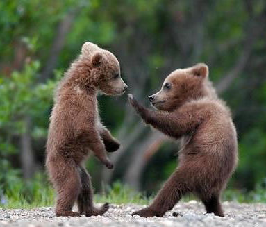 Cute Bear Pictures #2