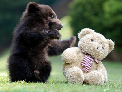 Cute Bear Pictures #3
