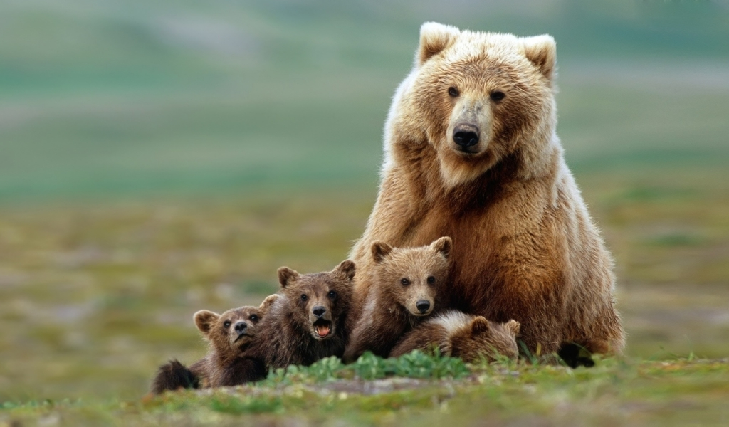 Cute Bear Pictures #4