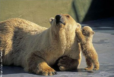 Cute Bear Pictures #5
