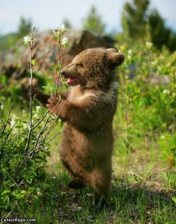 Cute Bear Pictures #6