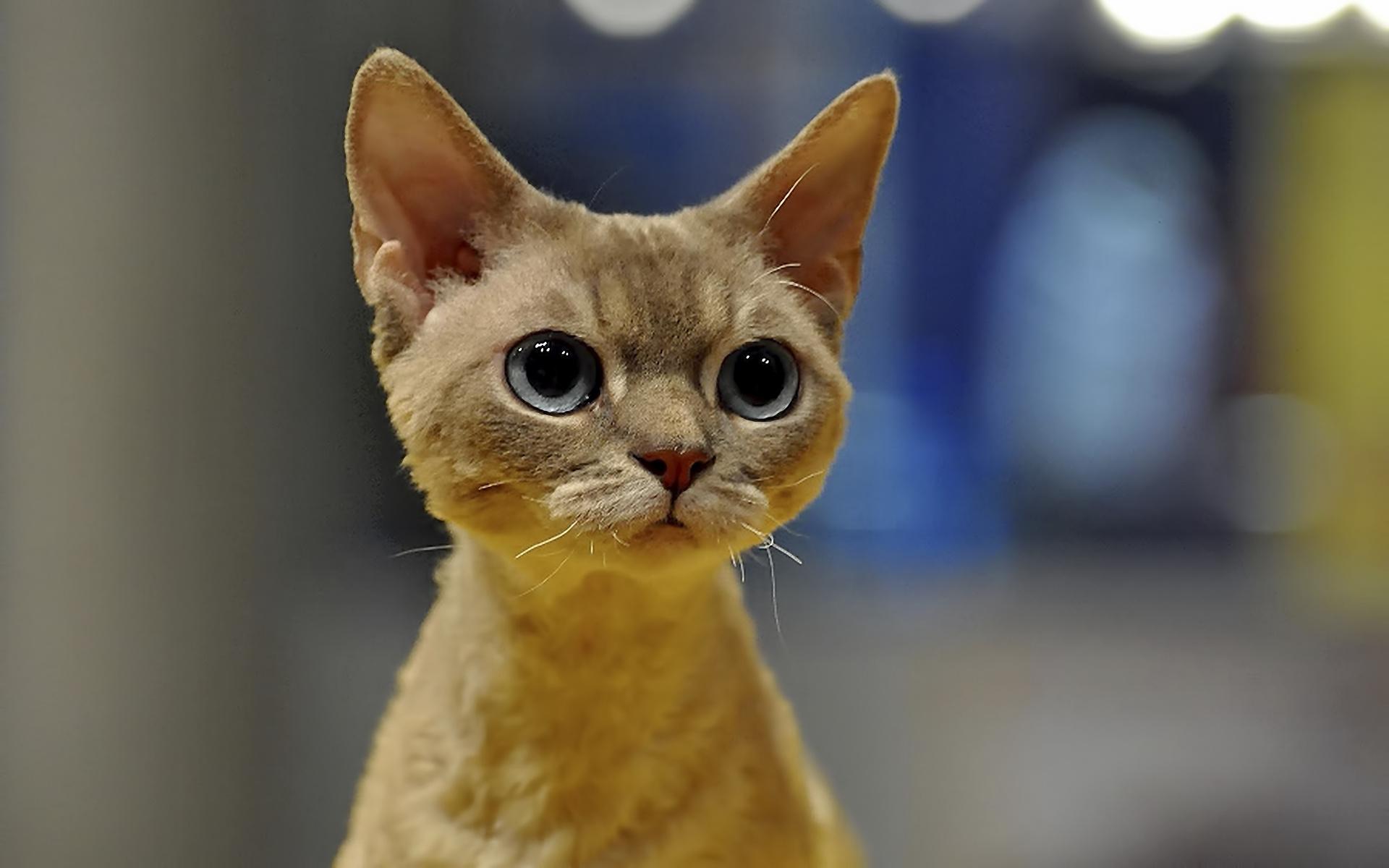 Cute big cat eyes